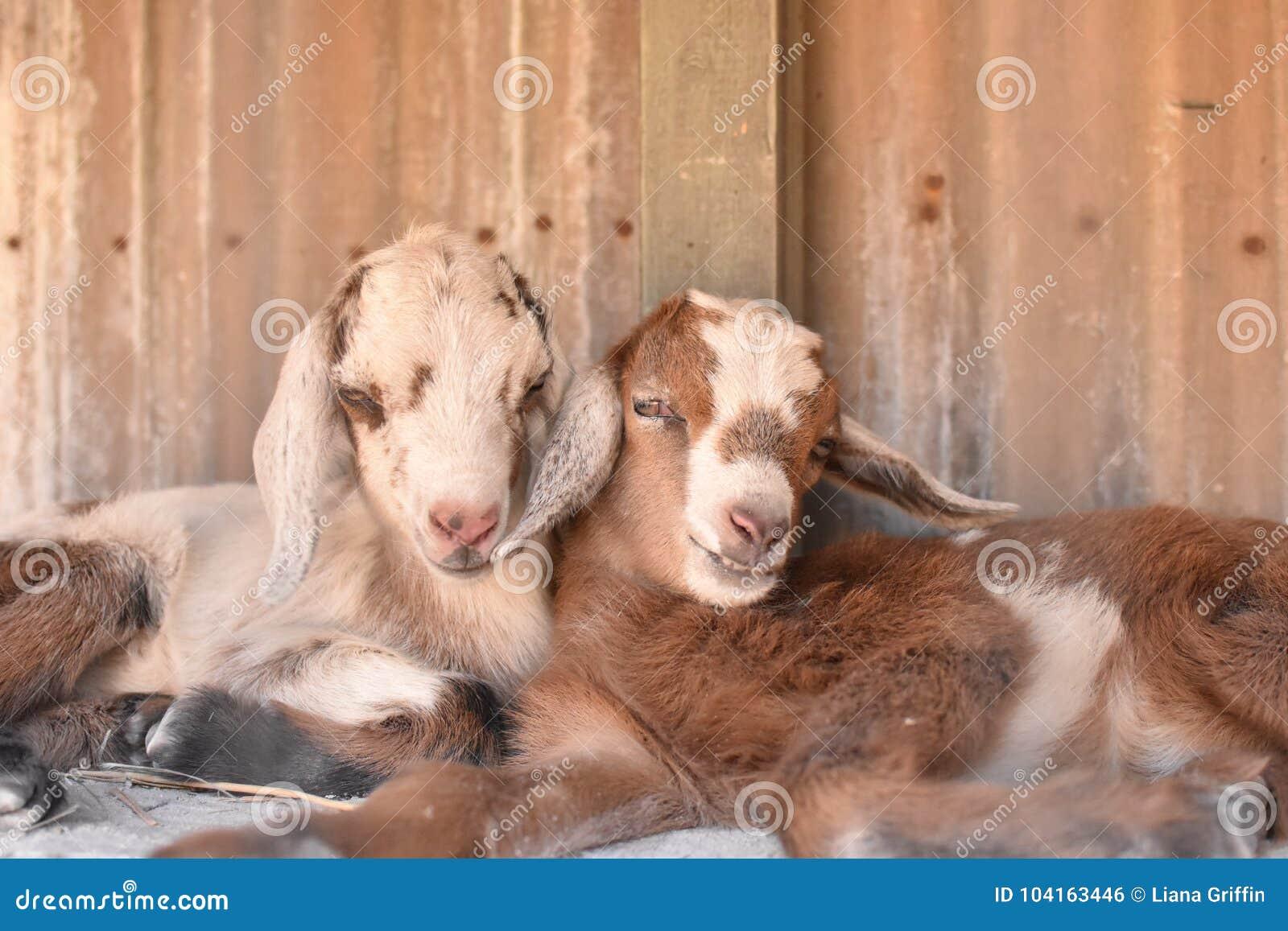 Dwa dziecko kózek cuddle