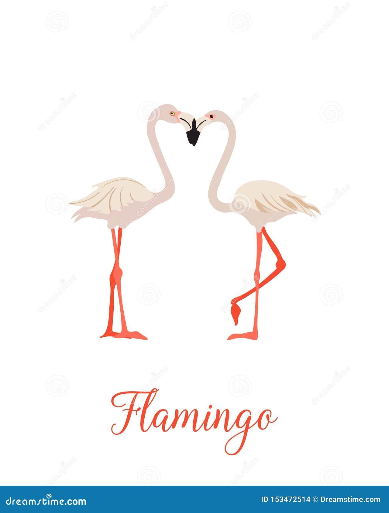 Dwa flaminga r??owy set Egzotyczny tropikalny ptak