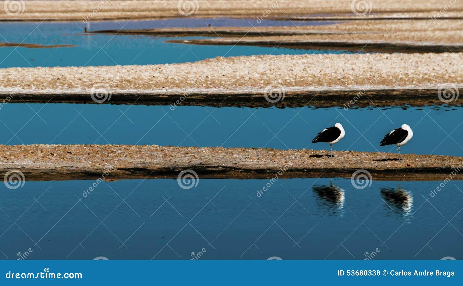 Dwa frajera w jeziorze