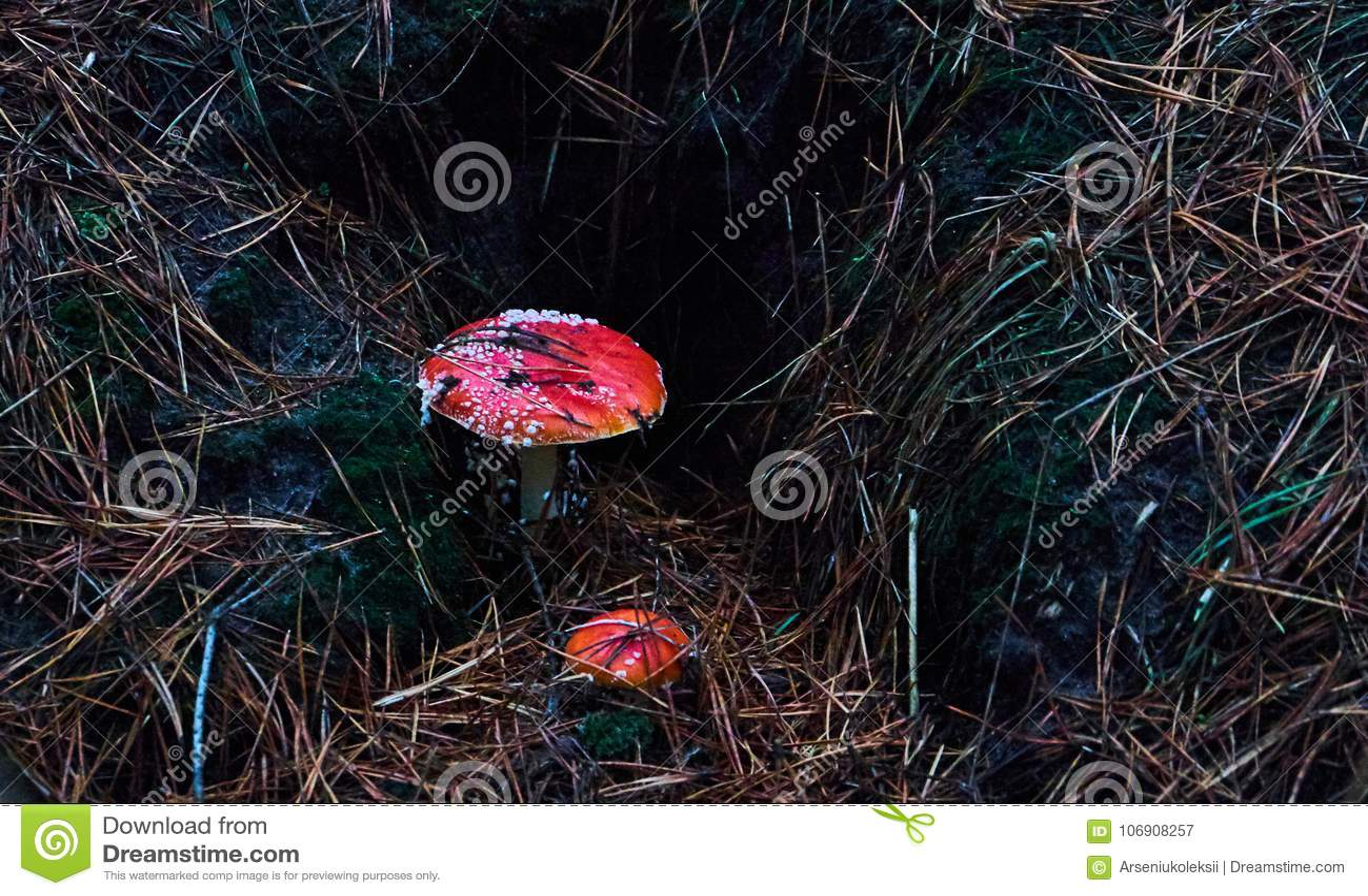 Dwa halucynogennej czerwonej komarnicy pieczarki