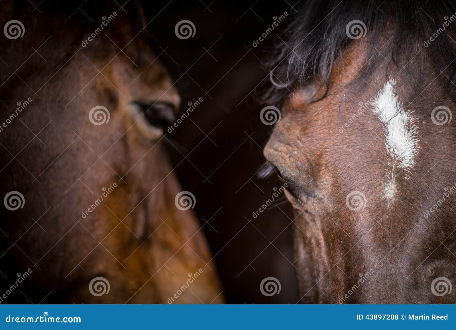 Dwa konia w ich stajence