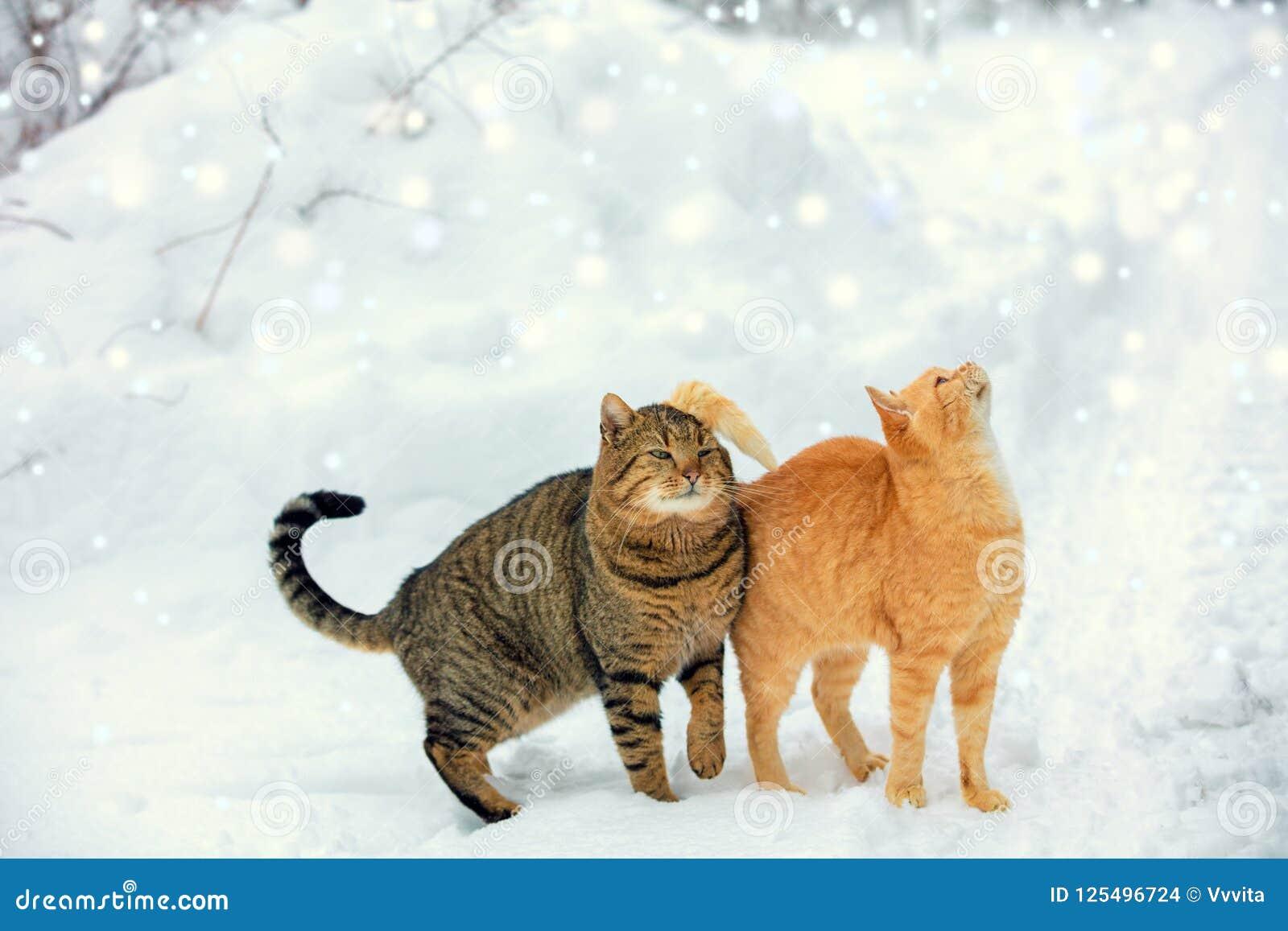 Dwa kotów spacer na śniegu podczas opadu śniegu