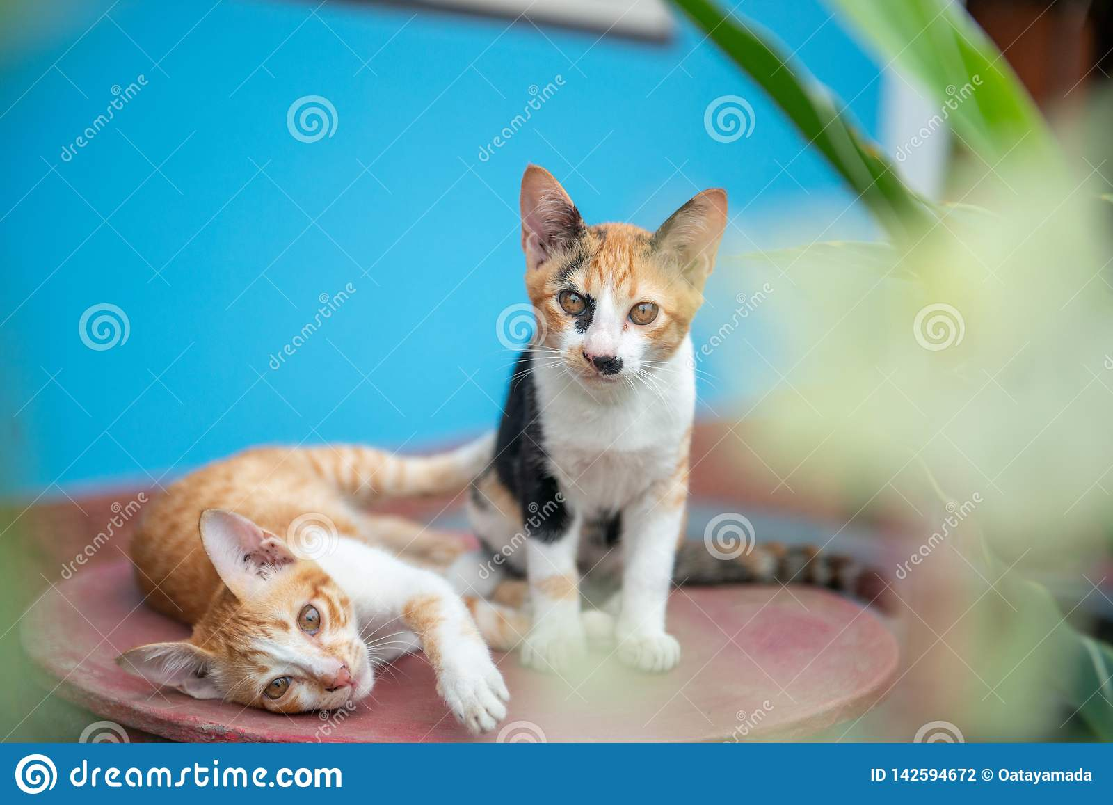 Dwa kot na błękitnym tle