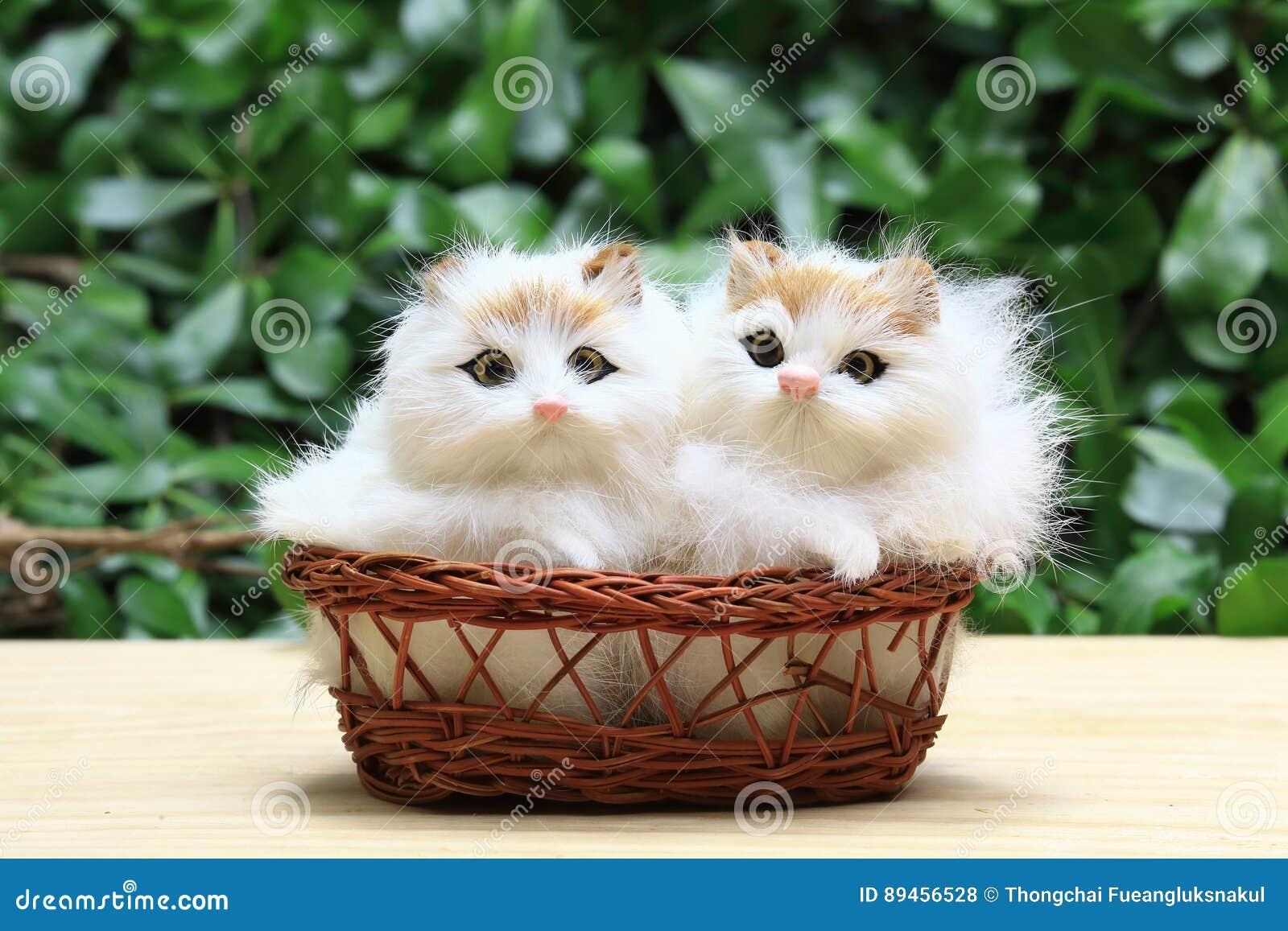 Dwa kot w koszu