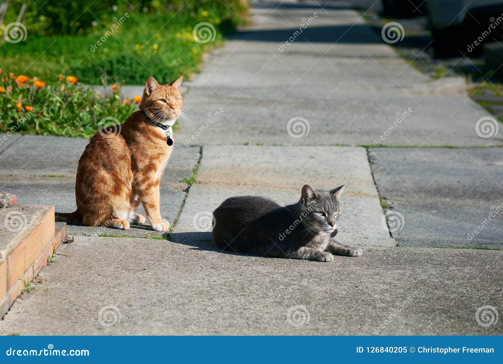 Dwa kota, jeden popielaty jeden, imbirowa czerwień, przyjaciele siedzi wpólnie na footpath patrzeje w ten sam kierunku