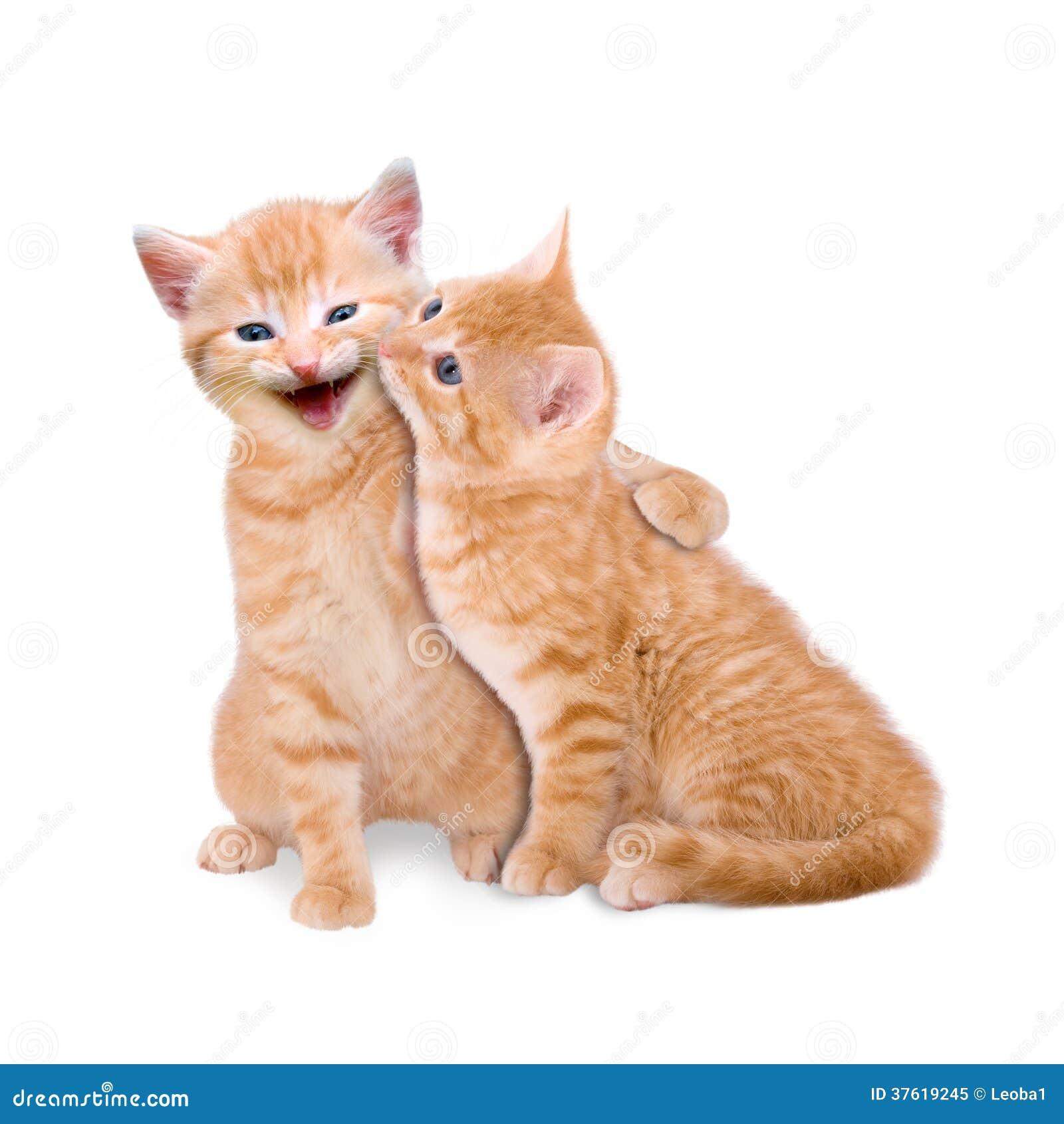 Dwa kota w miłości