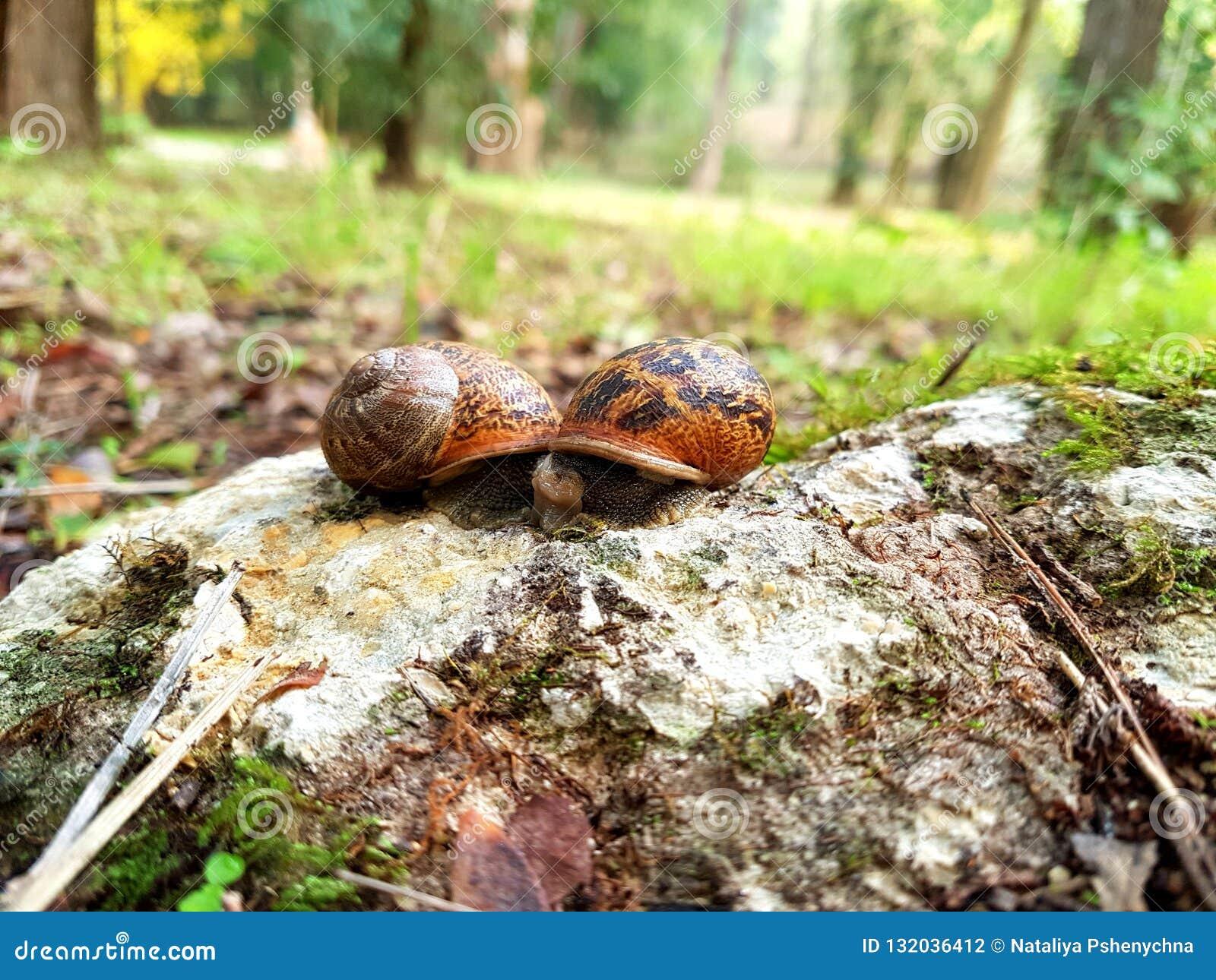 Dwa małego ślimaczka