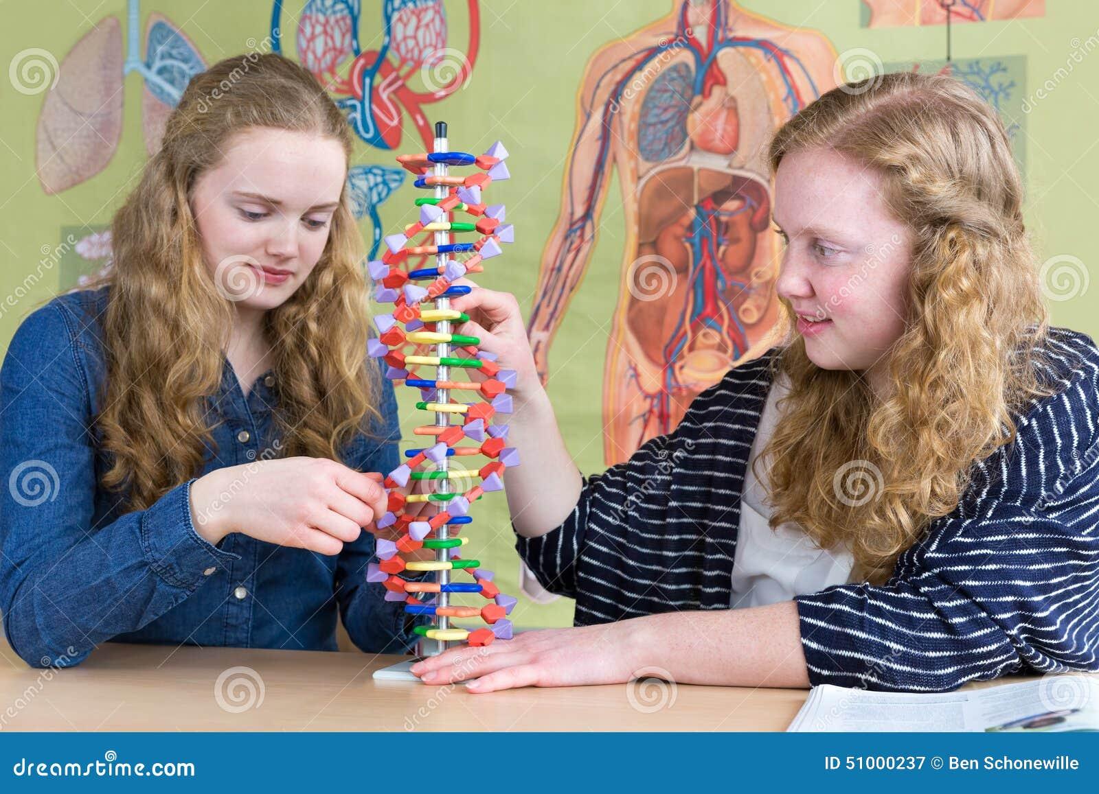 Dwa nastoletniej dziewczyny studiuje istoty ludzkiej DNA modelują w biologii lekci