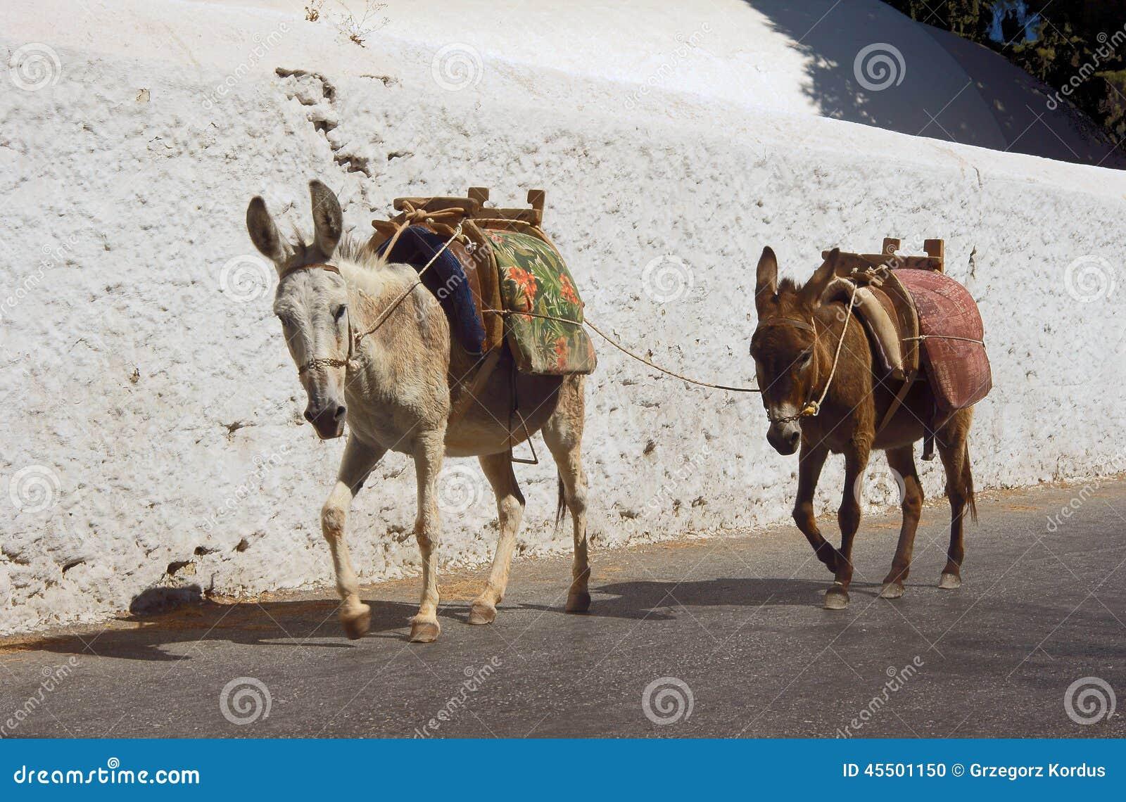 Dwa osła na ulicach