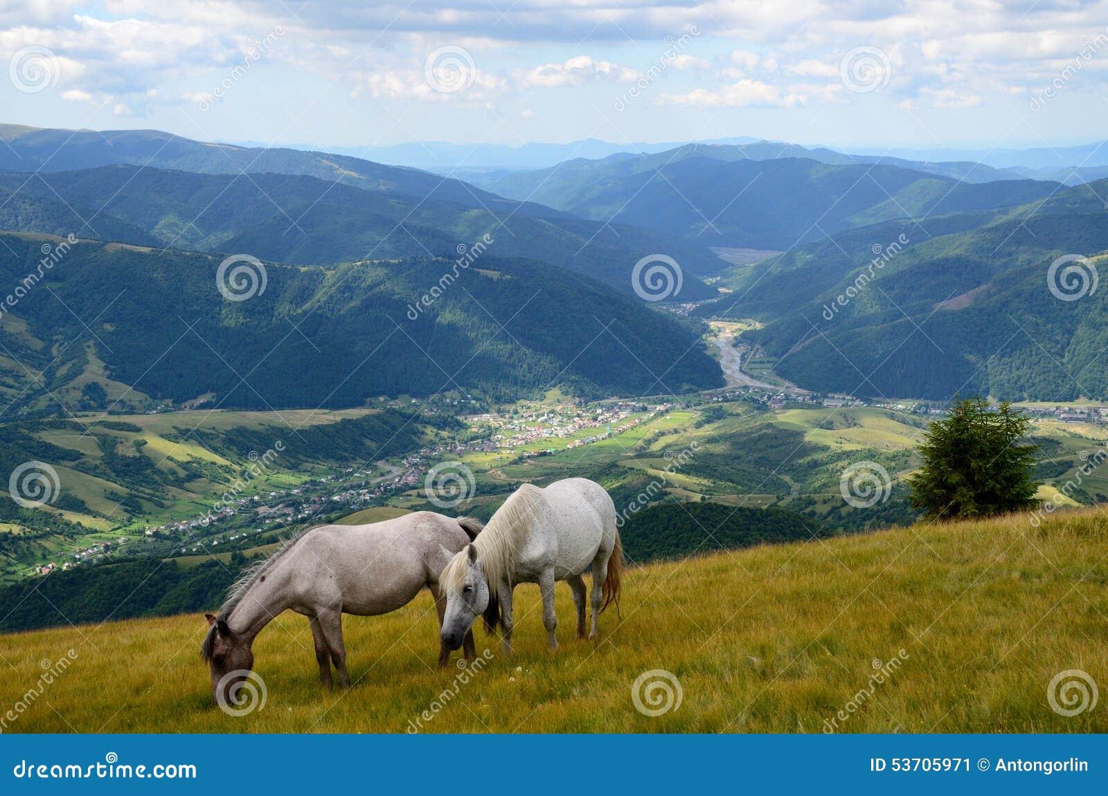 Dwa pastwiskowego konia
