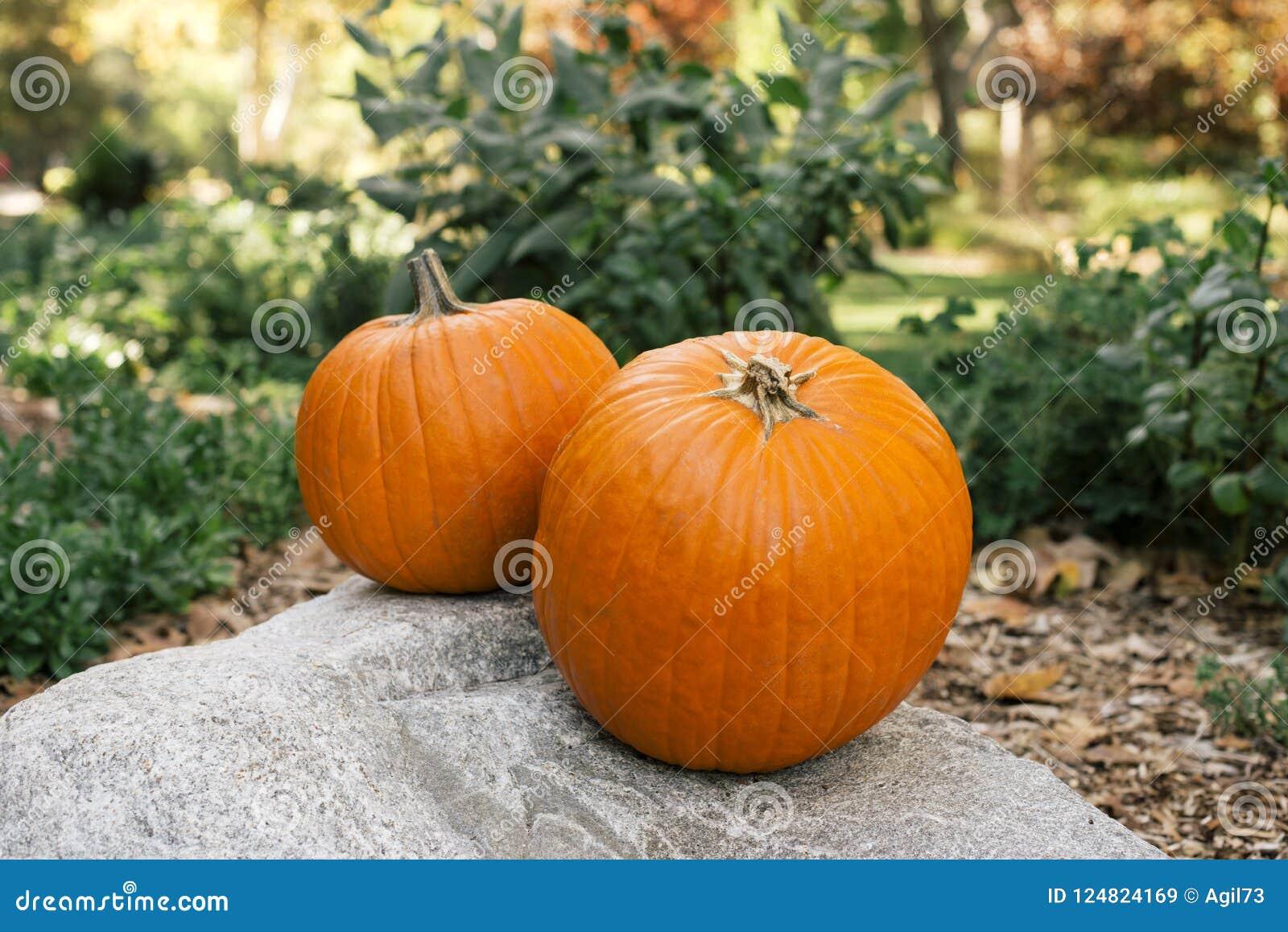 Dwa Pomarańczowej bani Kłaść na głazie