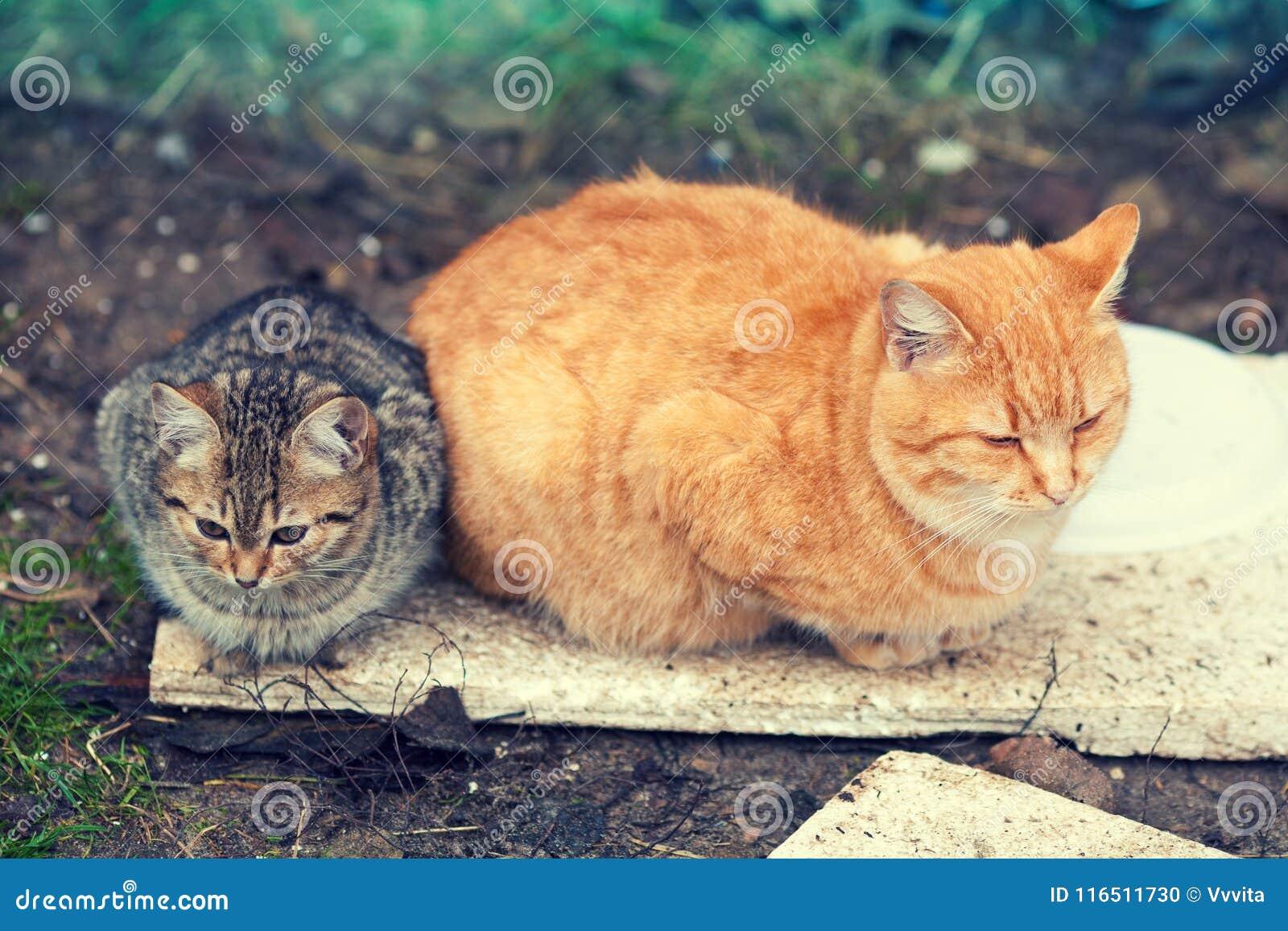 Dwa przybłąkanego kota kłama outdoors