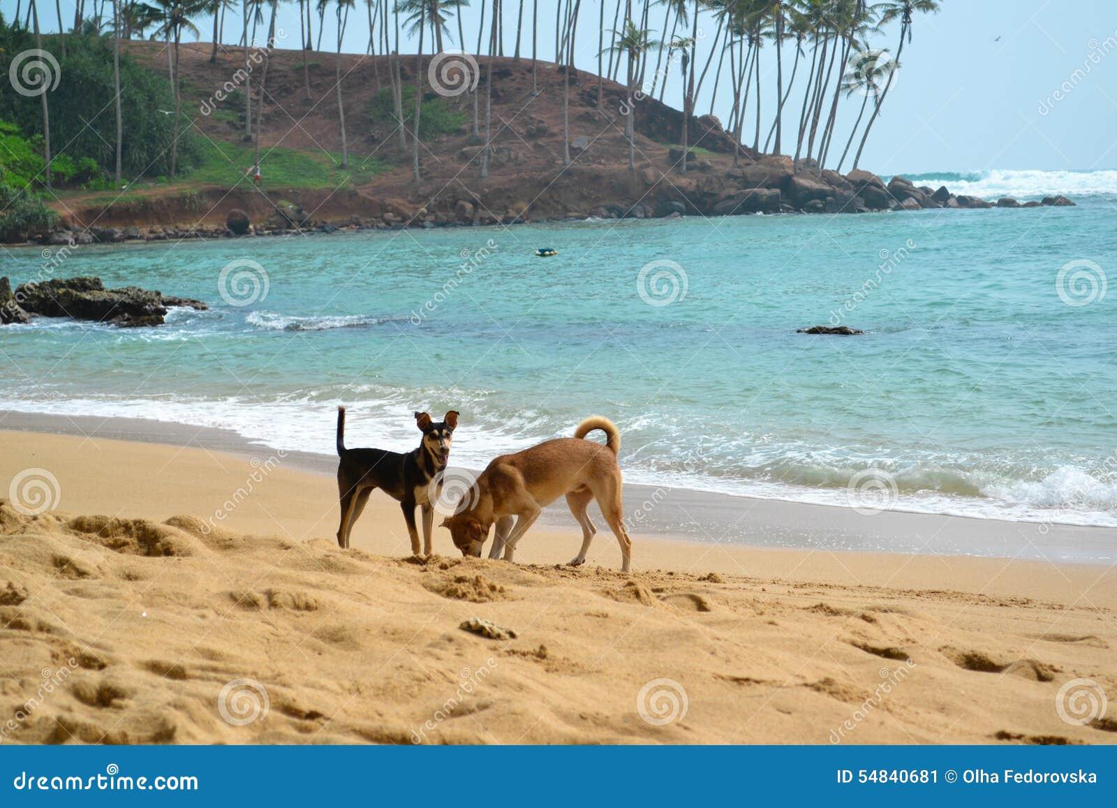 Dwa psa Kopie dziury Na ocean plaży strzale
