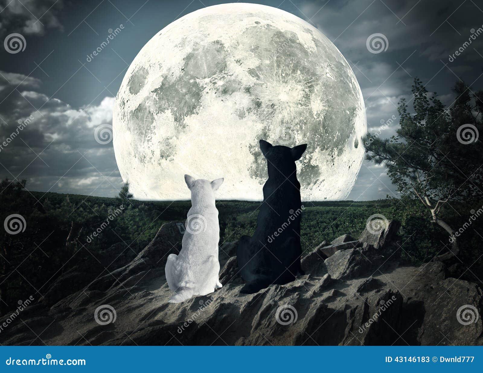 Dwa psa patrzeje księżyc