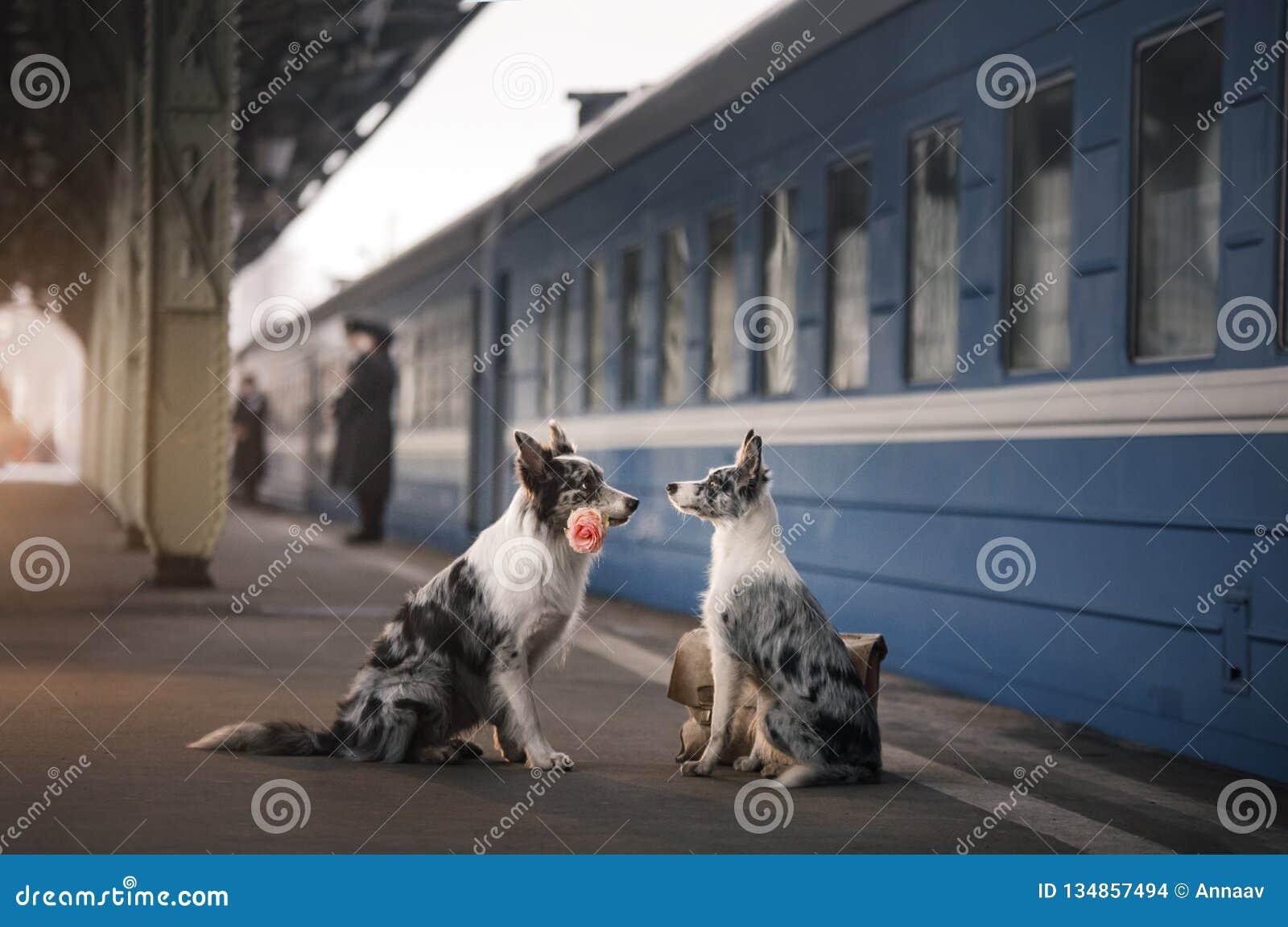 Dwa psa wpólnie Spotkanie przy stacją _
