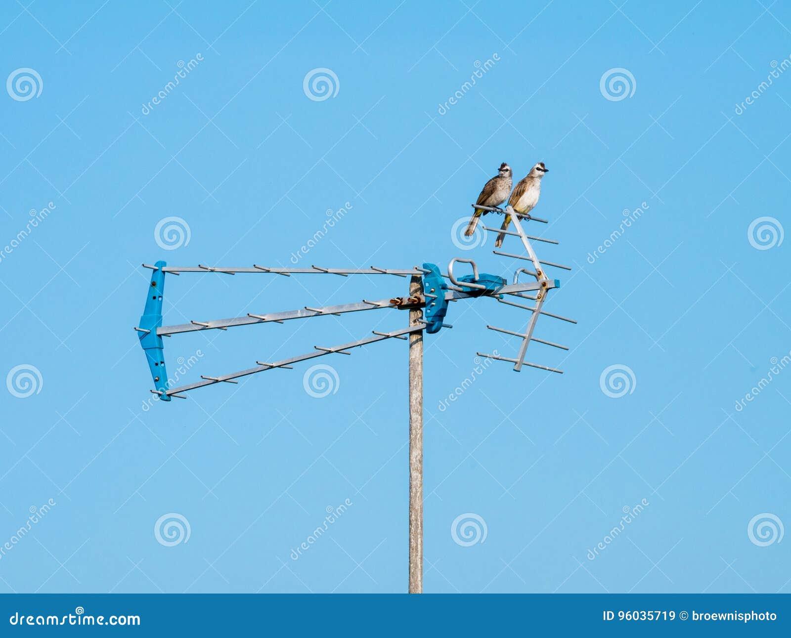 Dwa ptaka Siedzi na antenie