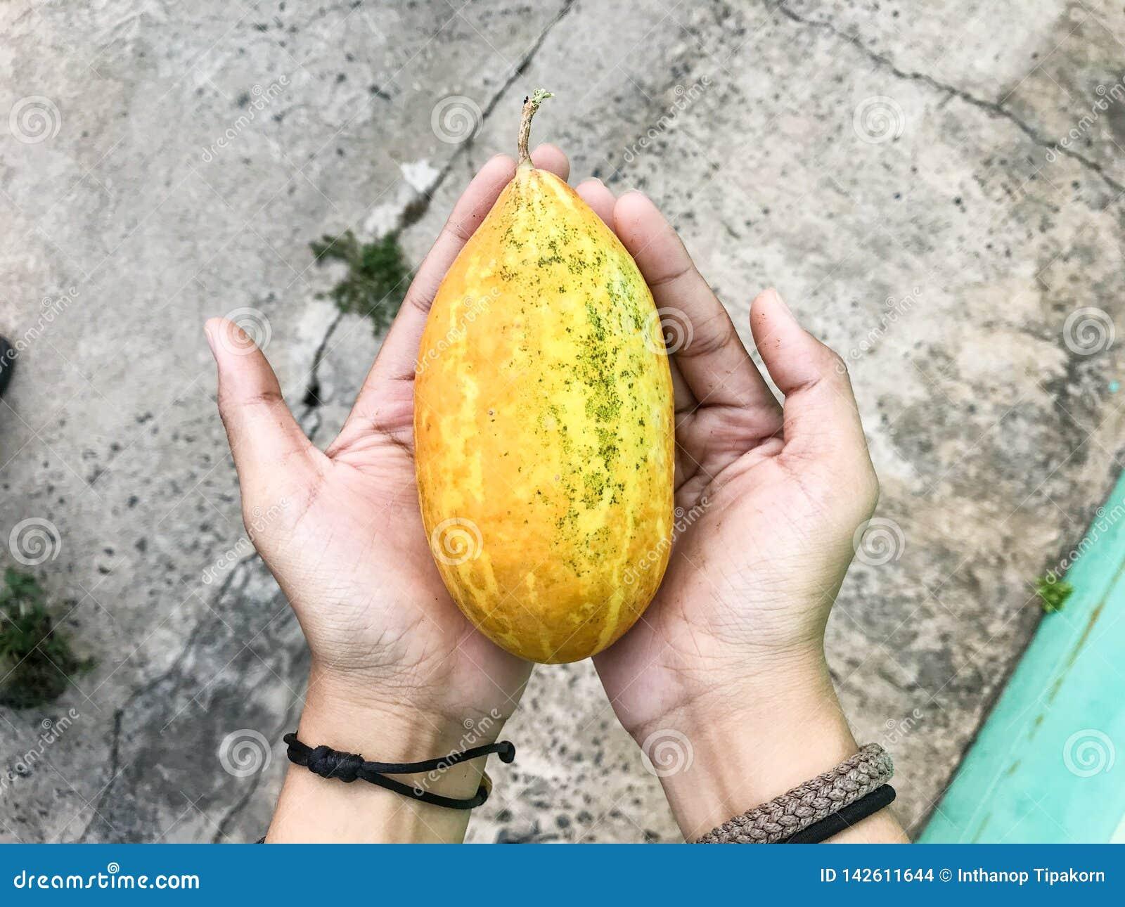 Dwa ręki podwyżki żółtego warzywa lubią melony