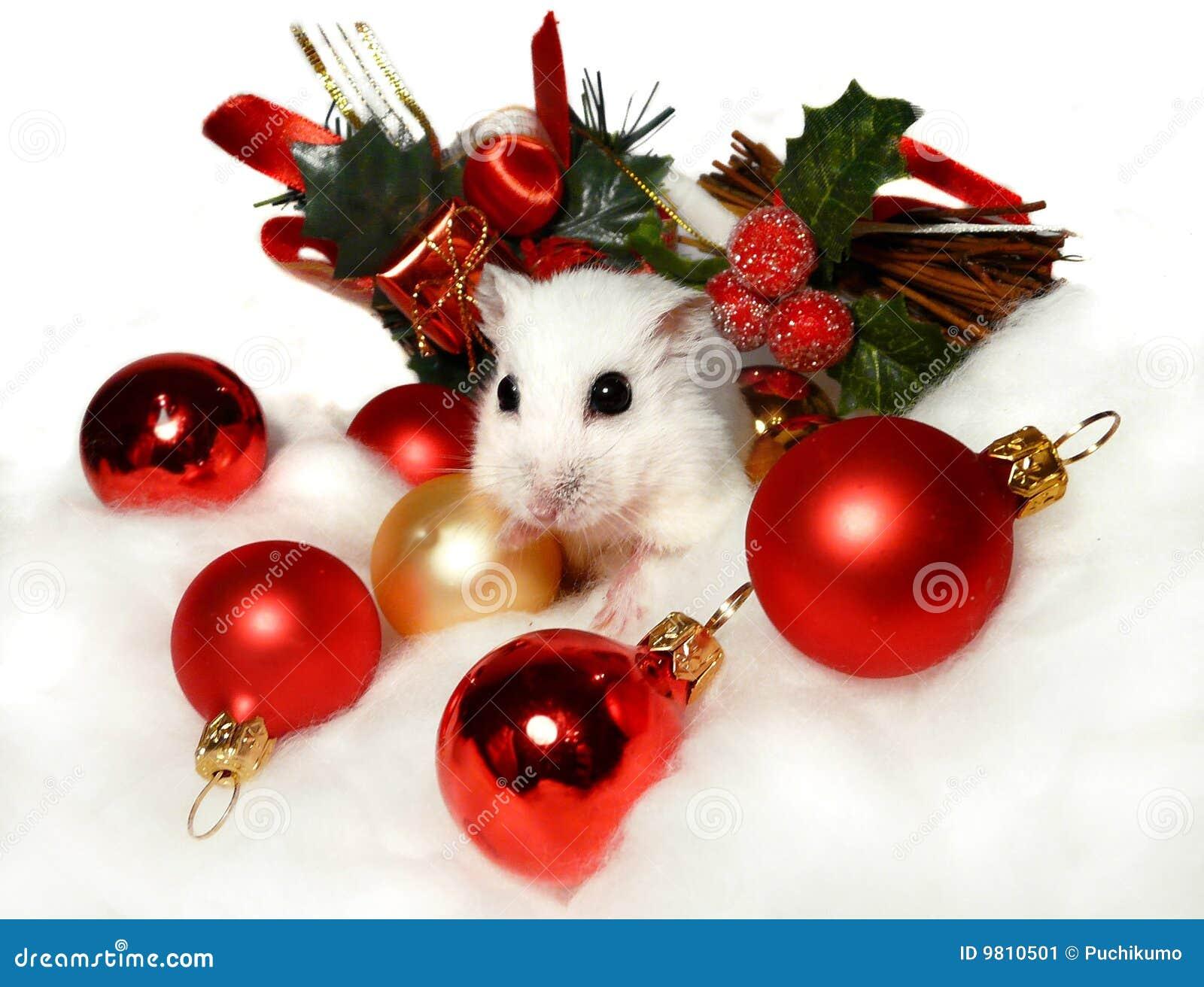 Dwerg hamster onder de decoratie van kerstmis stock for Tati decoration de noel