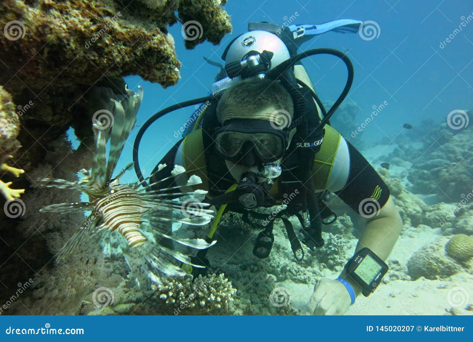 Dykare och fisk i Röda havet