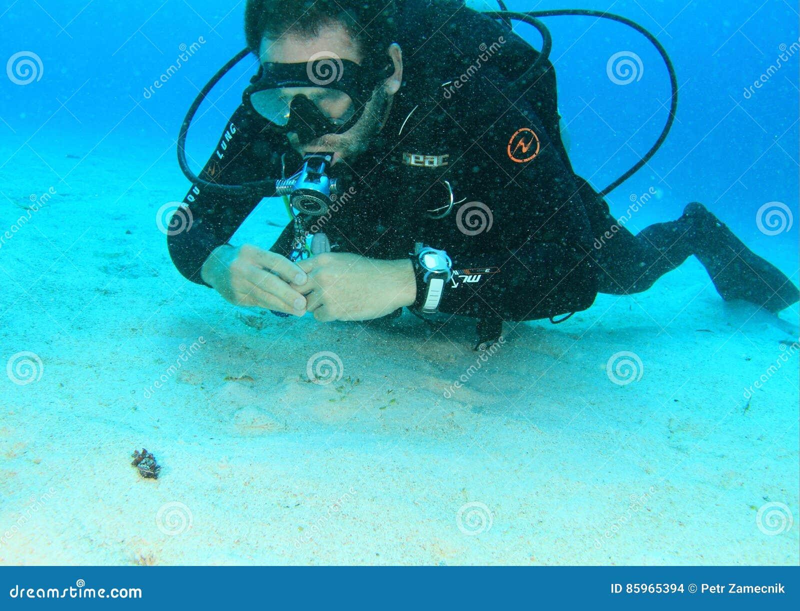 Dykare som håller ögonen på den flamboyanta bläckfisken