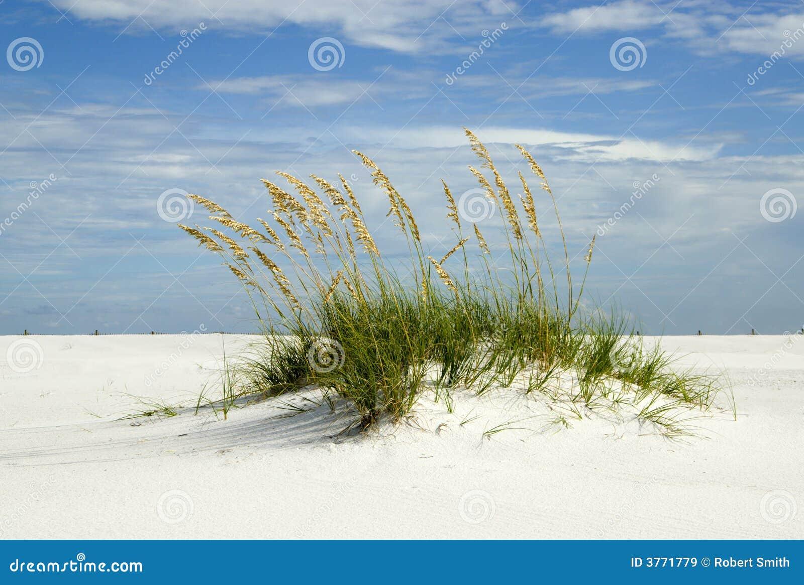 Dynörosa sand santa