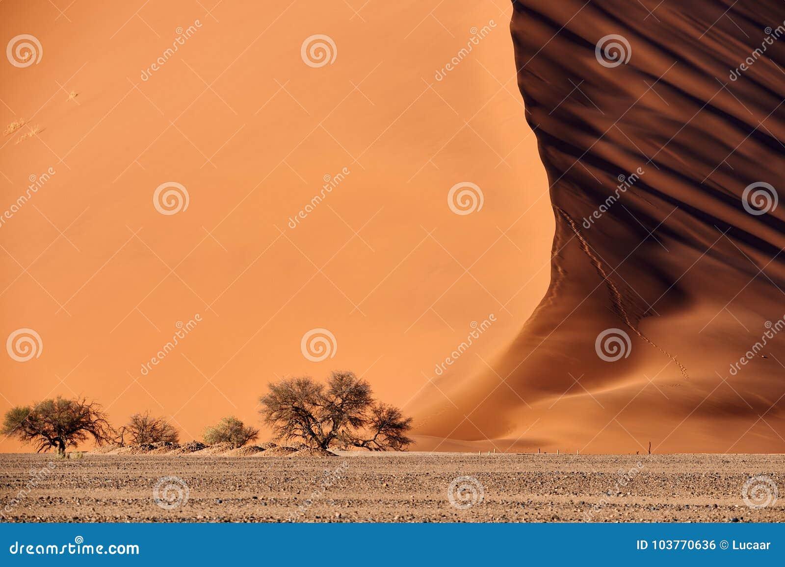 Dyn för Namib öken