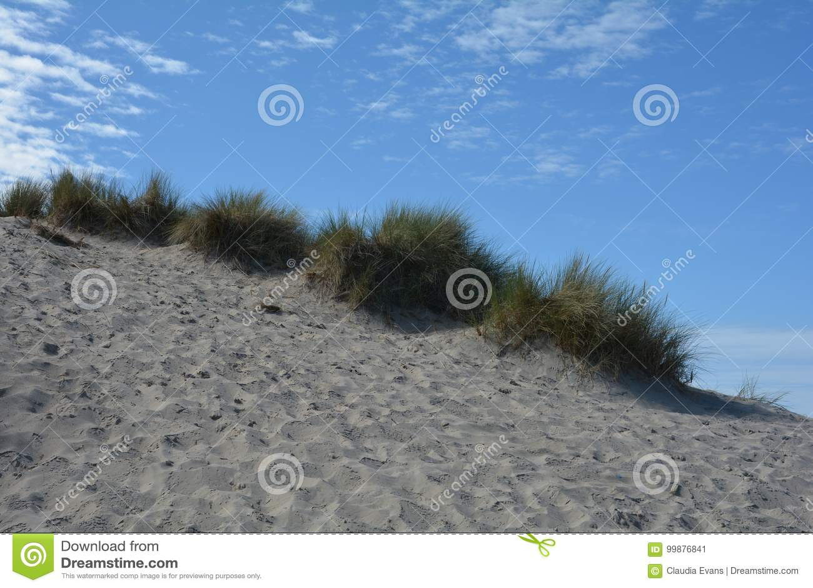 Dyn gräs på Nordsjönstranden