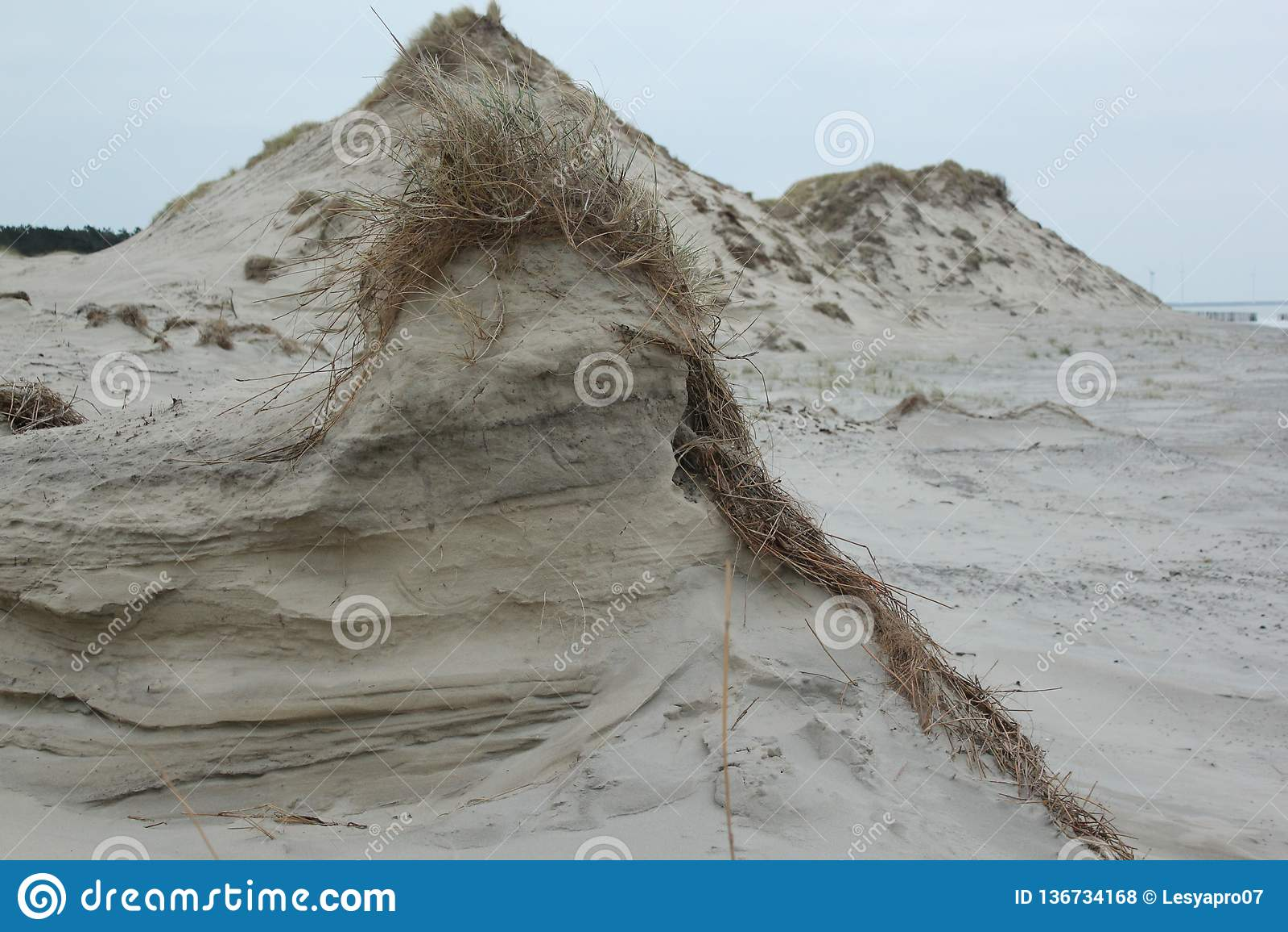 Dyn med gräs i blåsiga Januari på kusten av Nordsjö i Zeeland i Nederländerna