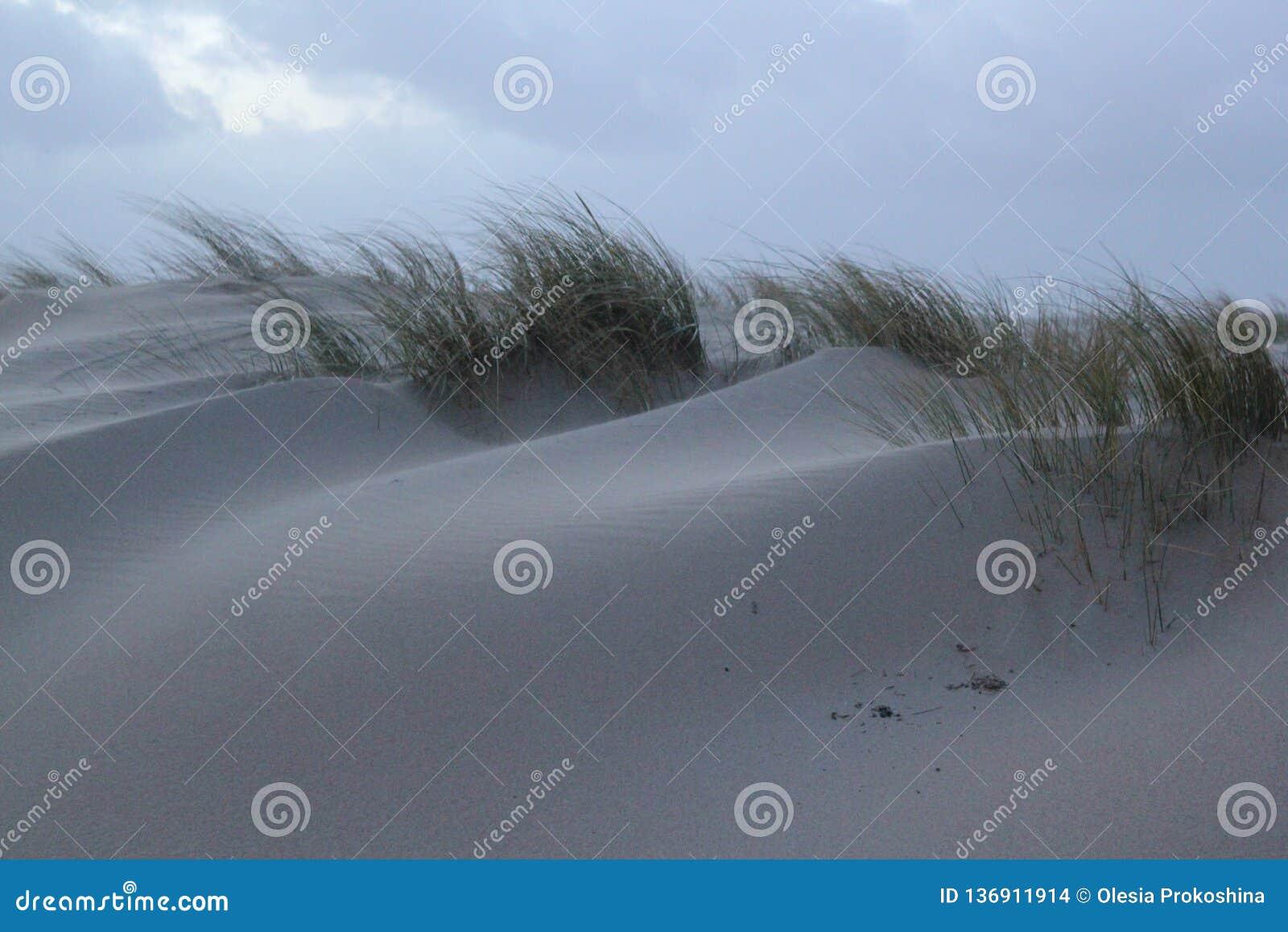 Dyn med gräs på kusten av Nordsjö i Zeeland i Nederländerna