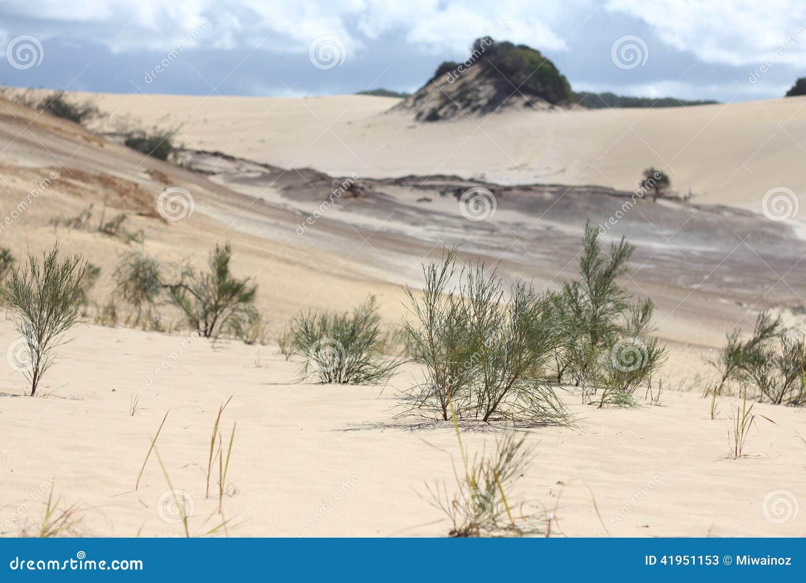 Dynamiczny wydm wysokiego zasi?gu piasku