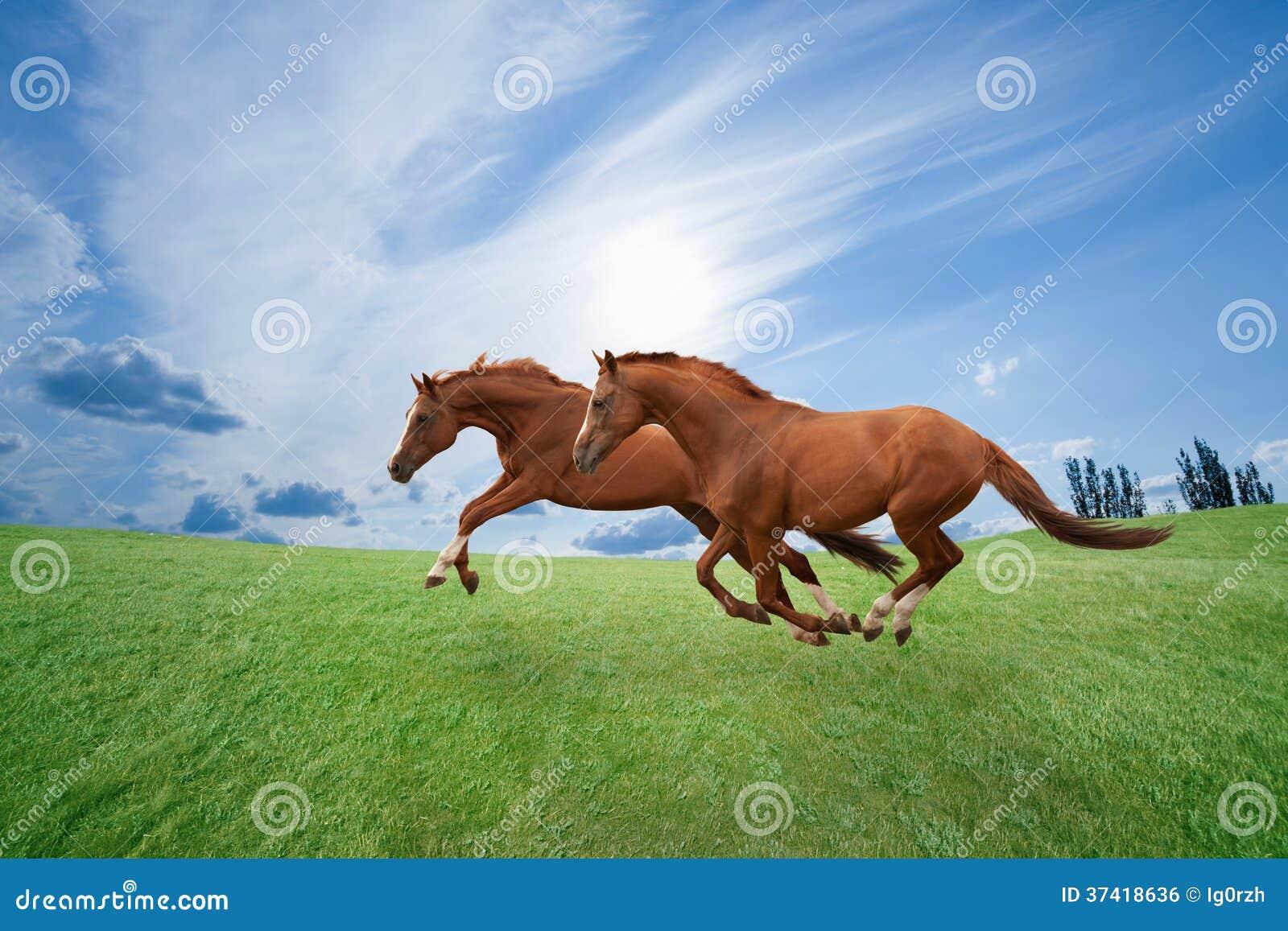 Działający konie