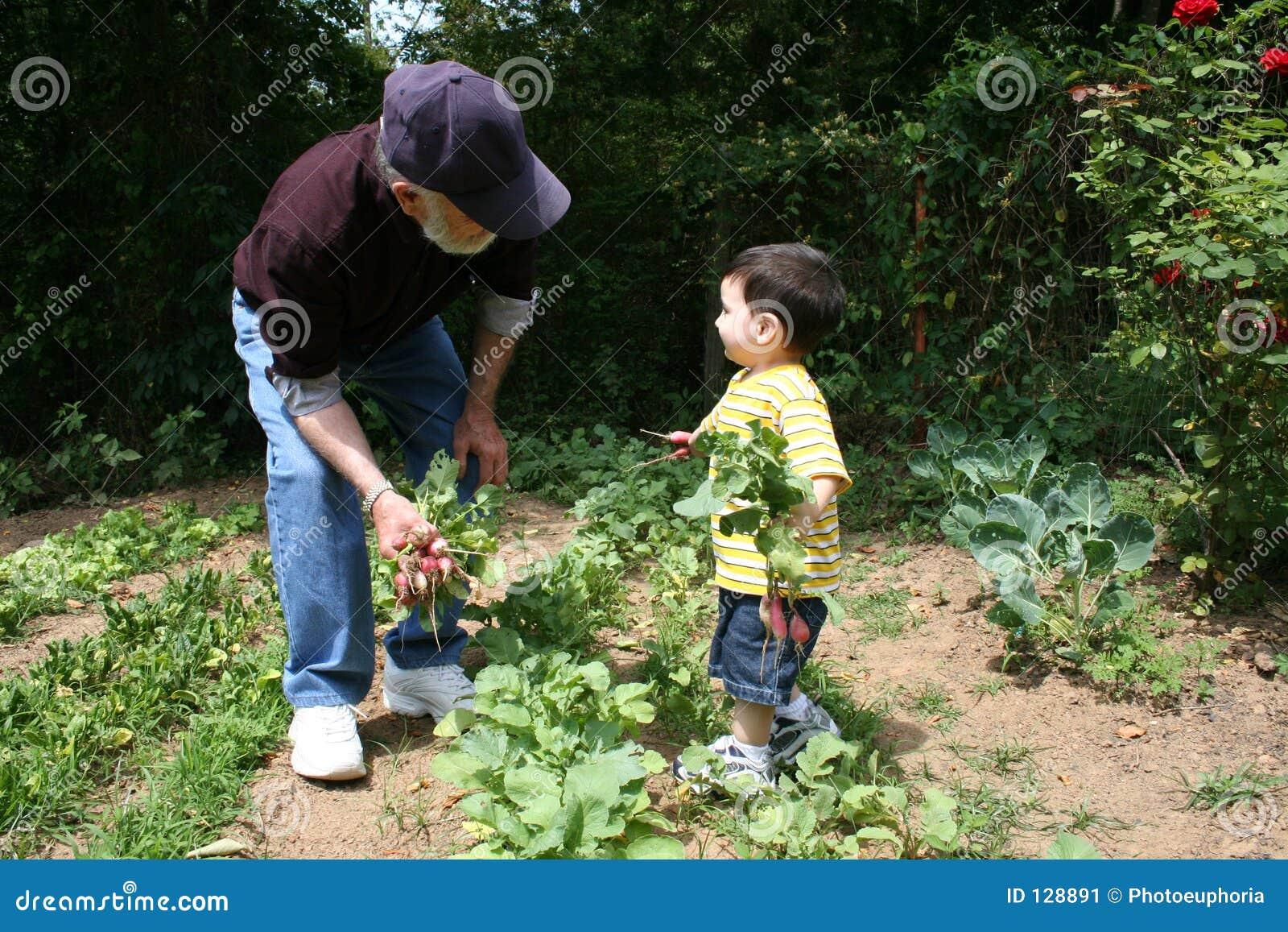 Dziadek pomóc ogrodniczego chłopcze