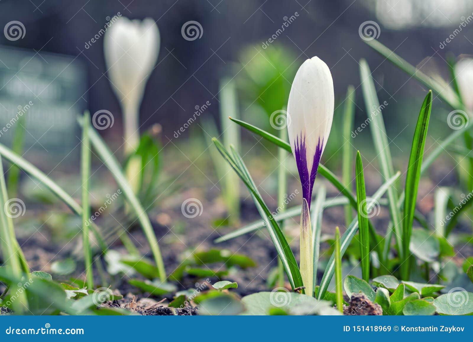 Dzicy kwiaty na łące na pogodnym lekkim tle Marzycielski delikatny artystyczny wizerunek Mi?kka selekcyjna ostro??
