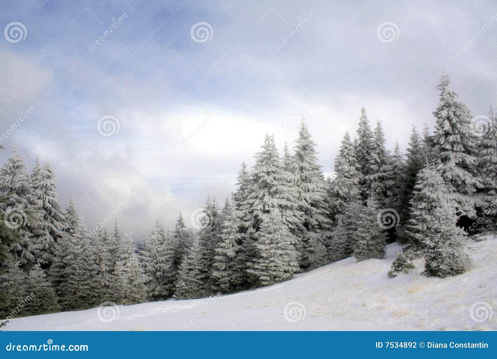 Dzień piękna zima