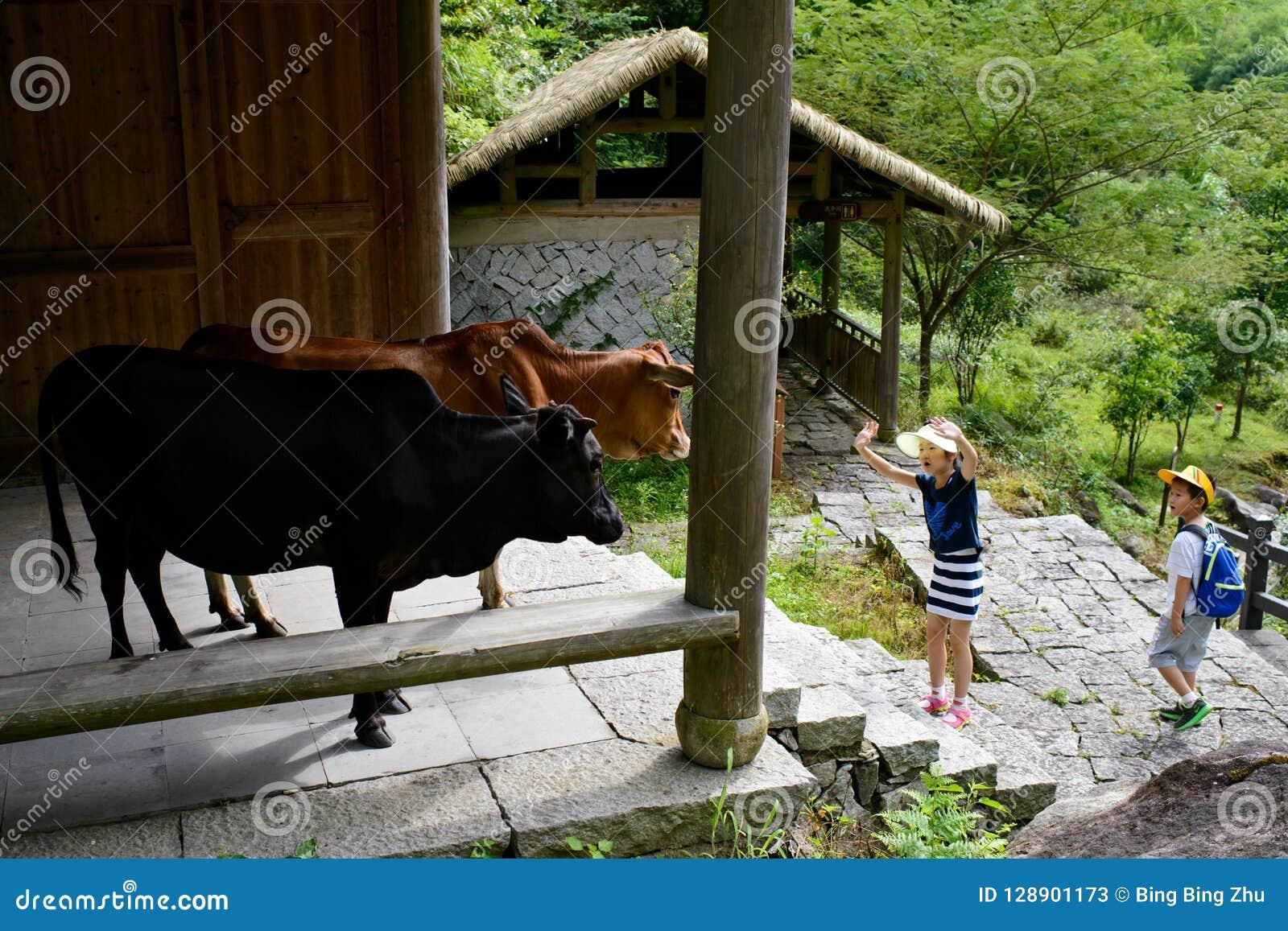 Dzieci bawić się z krowami