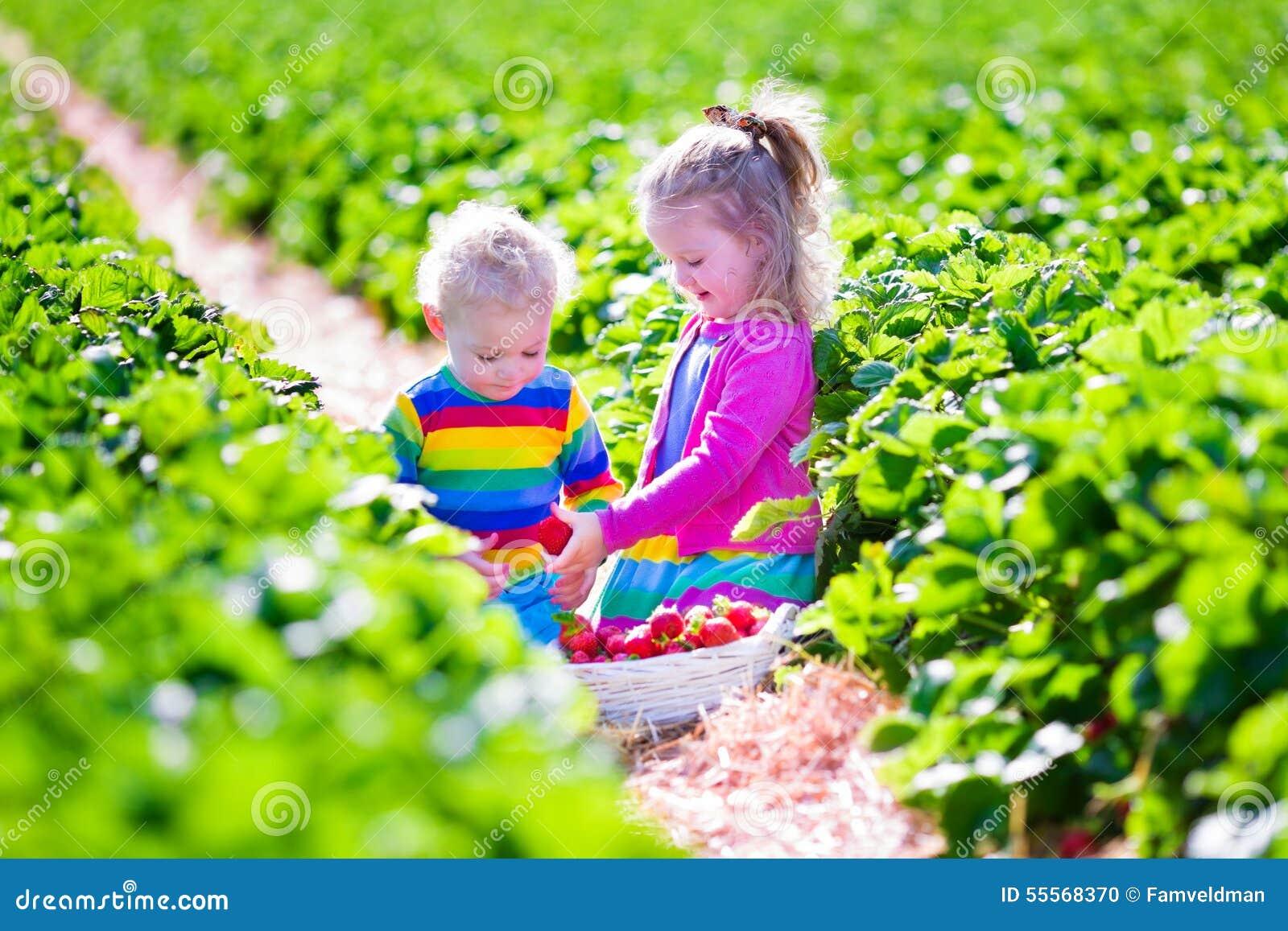 Dzieciaki podnosi świeżej truskawki na gospodarstwie rolnym