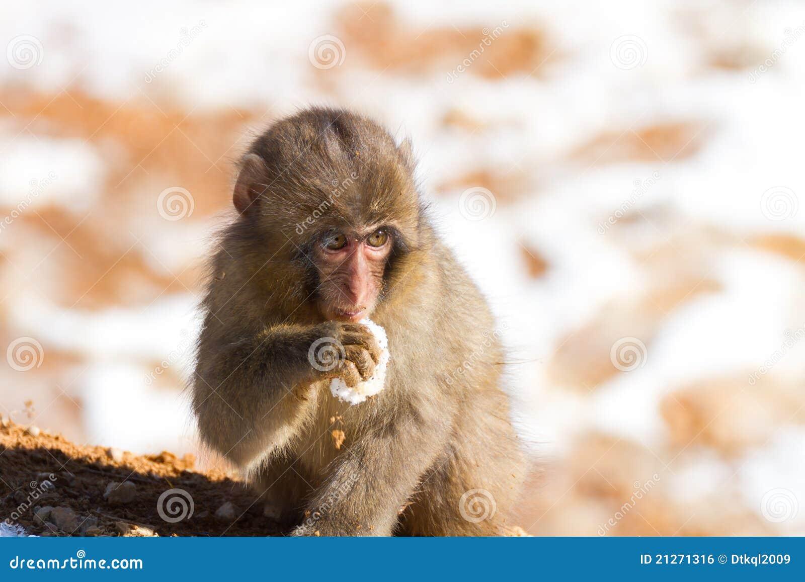 Dziecka japońska makaka zima