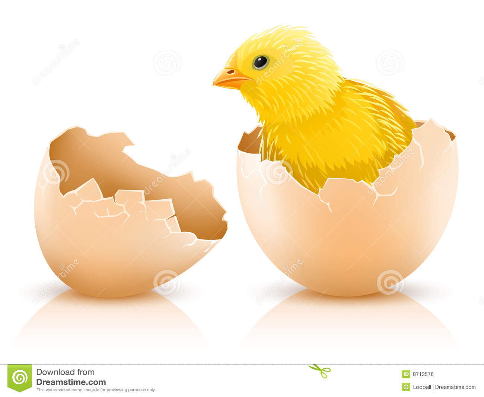 Dziecka kurczak pękająca jajeczna karmazynka wśrodku s