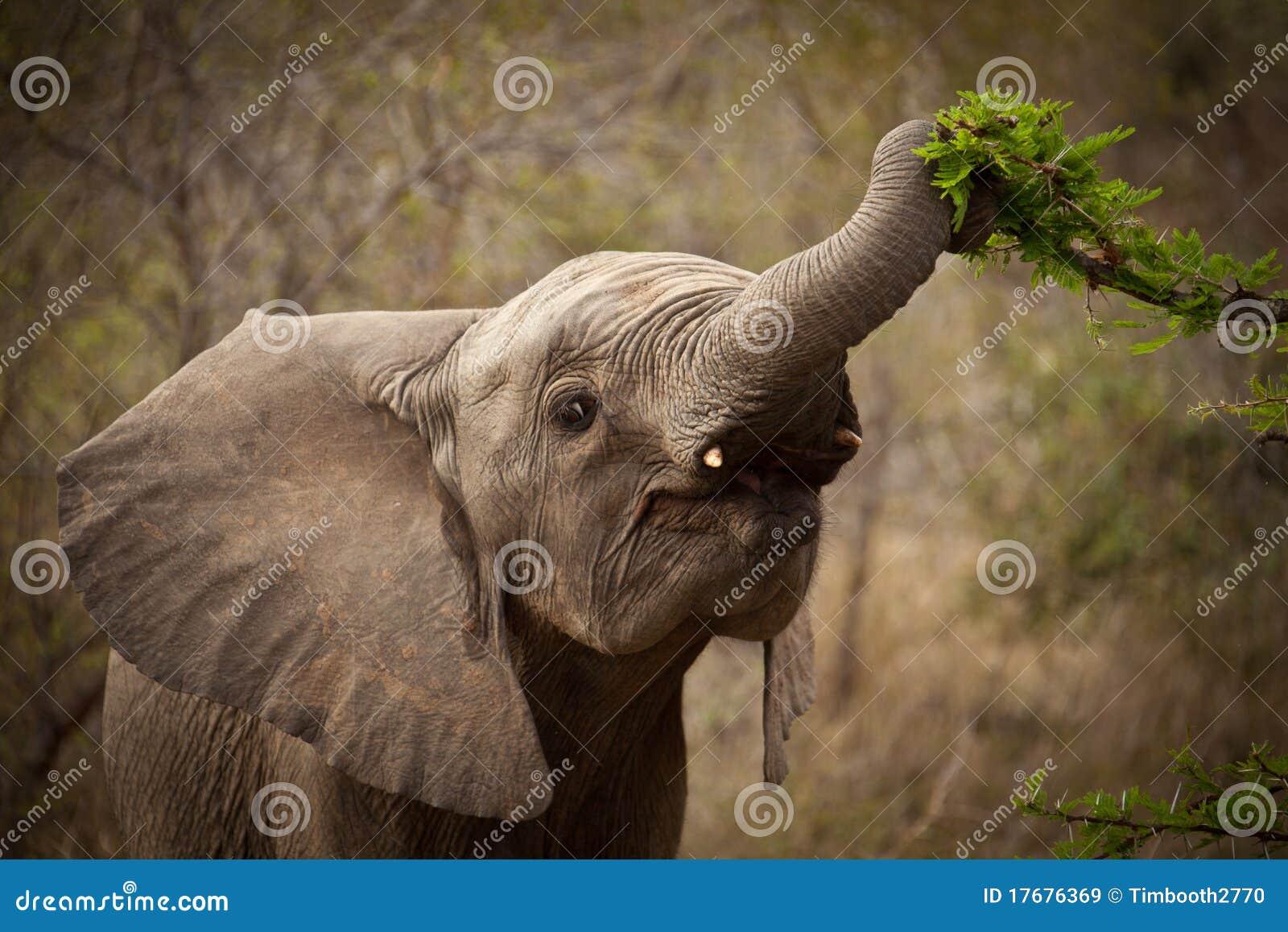 Dziecka słonia karmienie