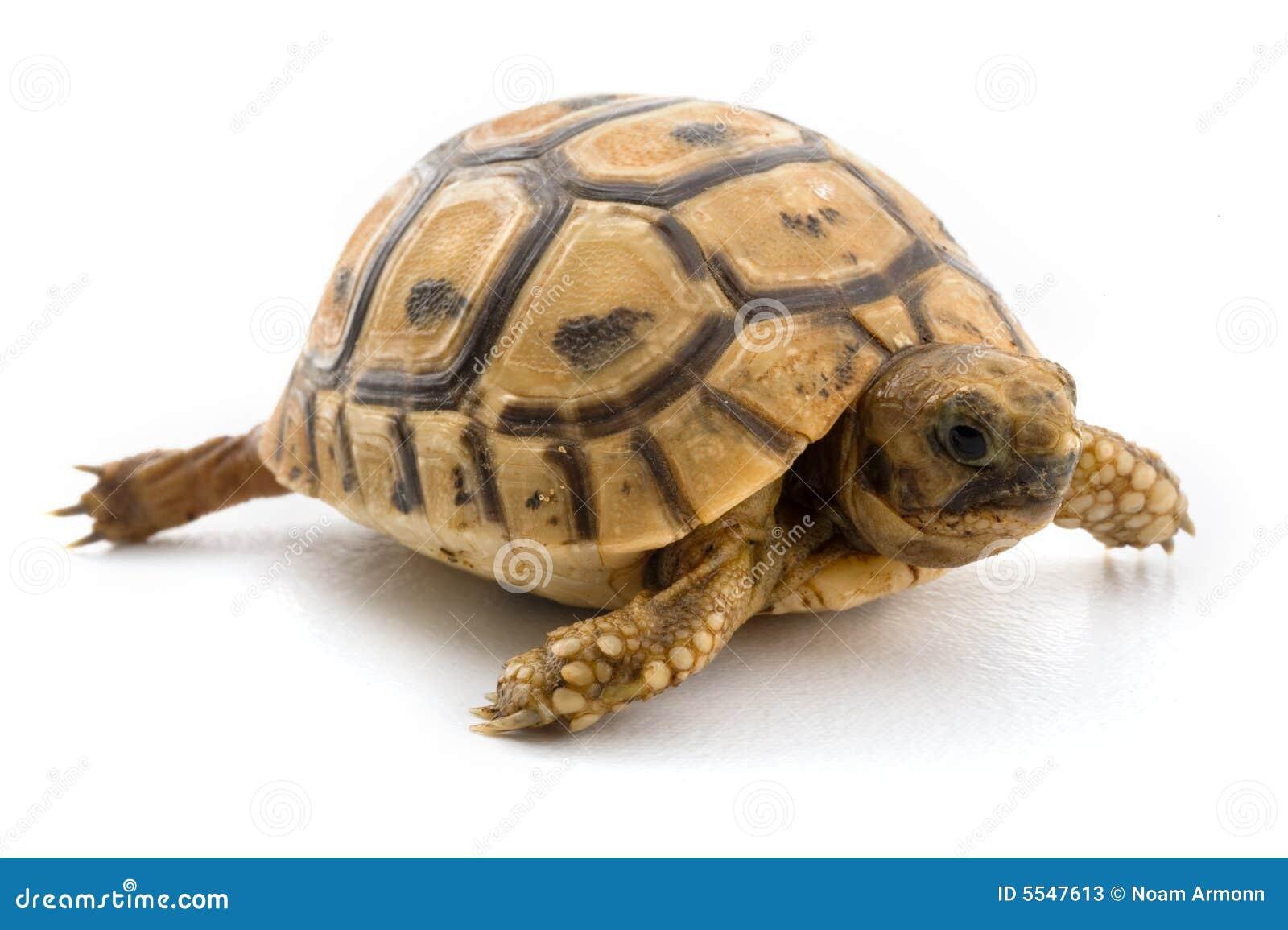 Dziecko żółwia
