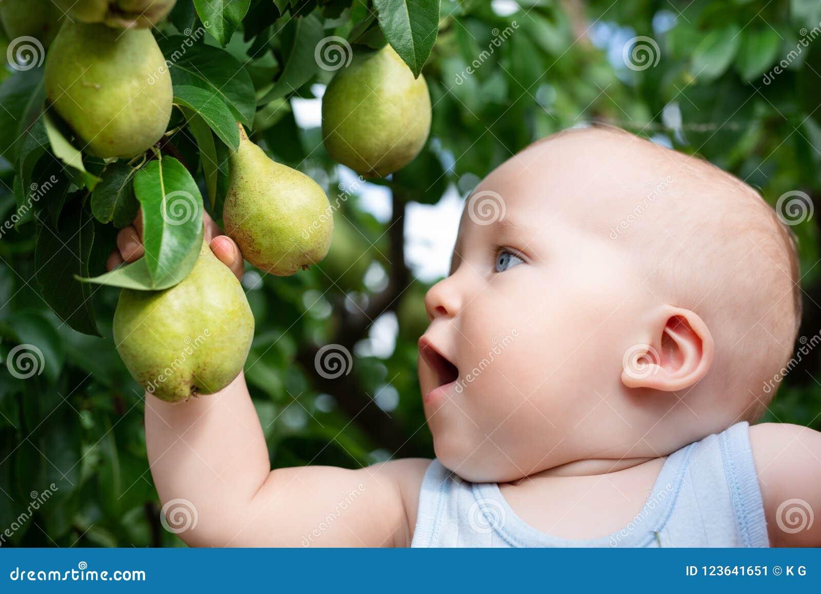 Dziecko bierze dojrzałe bonkrety przy sadem w jesieni Chłopiec chce jeść słodką owoc od drzewa w ogródzie przy spadku żniwem