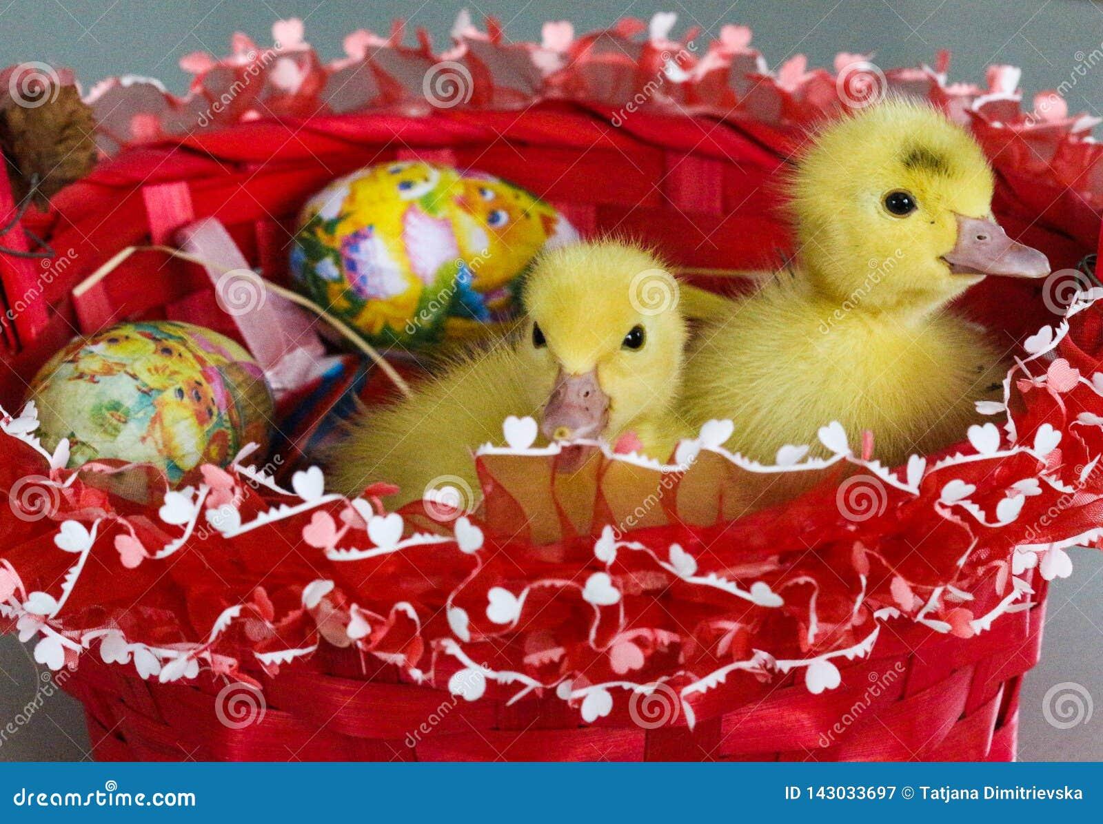 Dziecko kaczki i Wielkanocny kosz