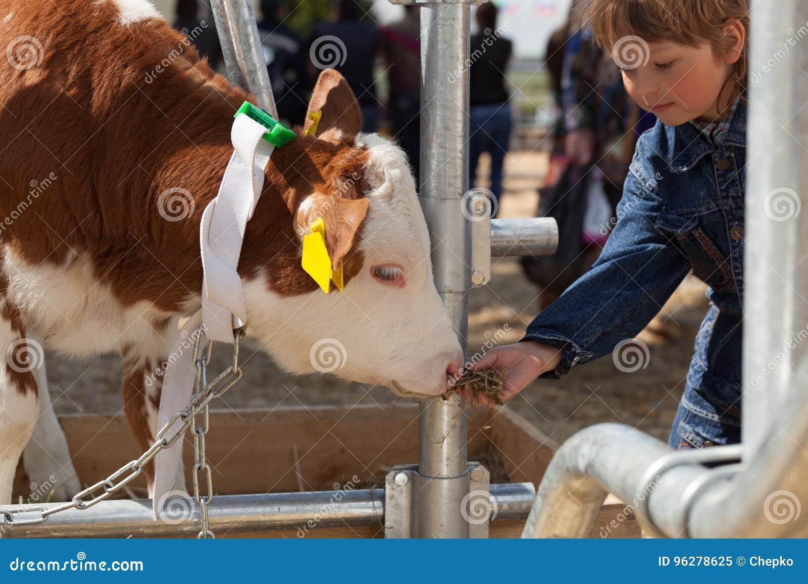 Dziecko karmi brown łydki