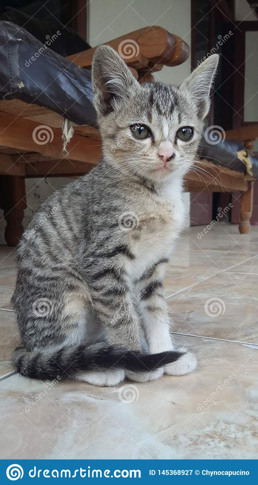Dziecko kota cutes