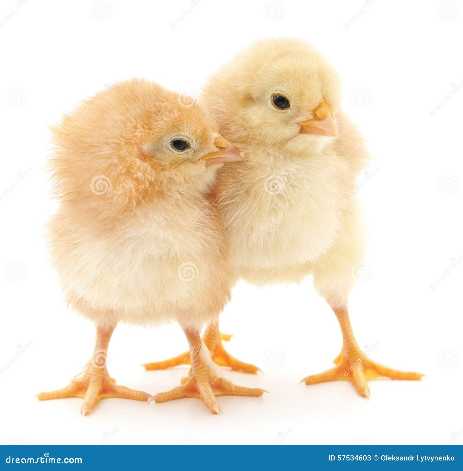 Dziecko kurczaki