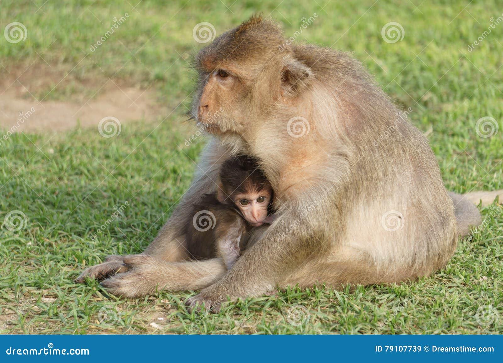 Dziecko małpa z Macierzystą pielęgnacją