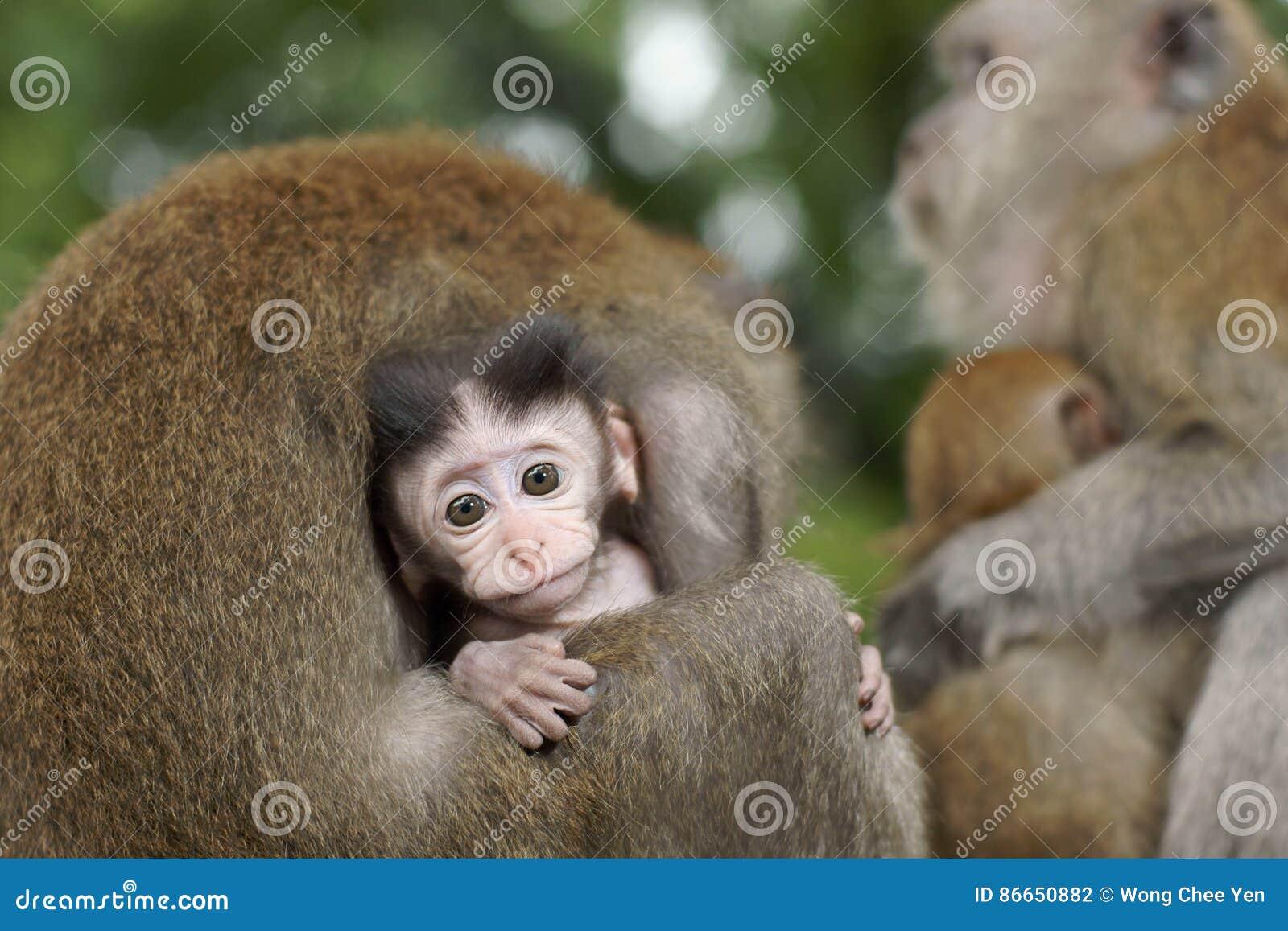 Dziecko makak Przygotowywa
