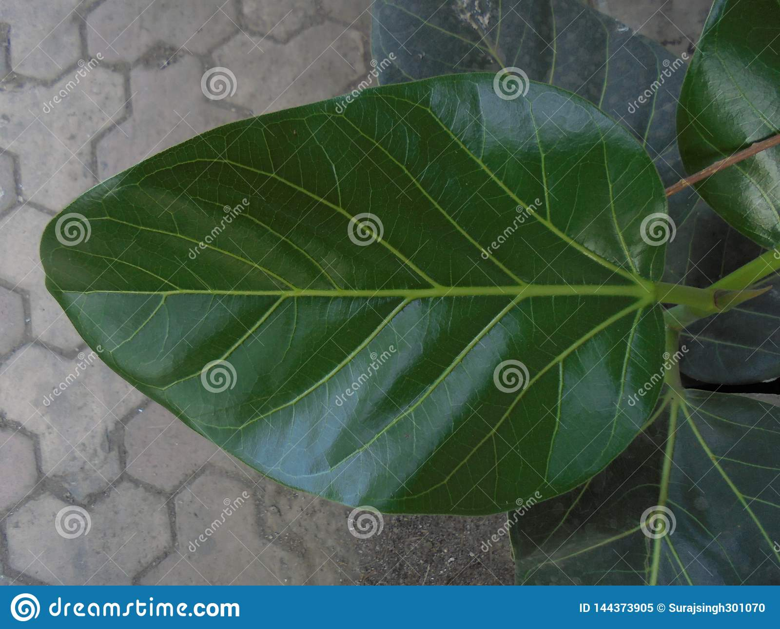 Dziecko roślina w otwartej fabule