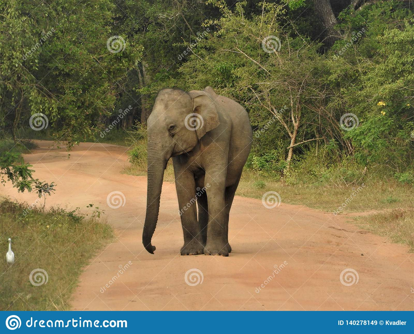 Dziecko słoń chodzi w zielonej dżungli na jasnym słonecznym dniu w Yala parku narodowym w Sri Lanka