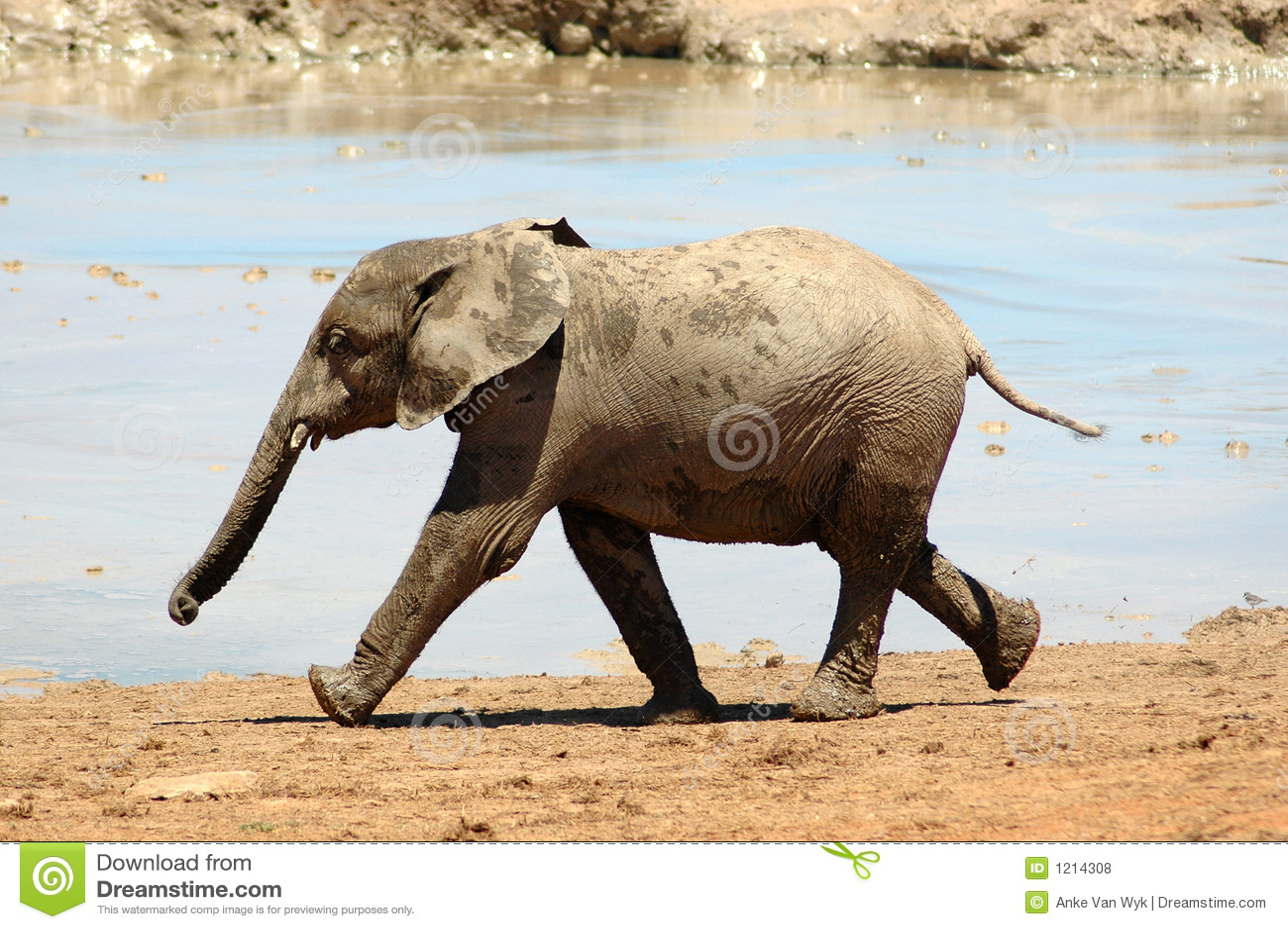 Dziecko słonia